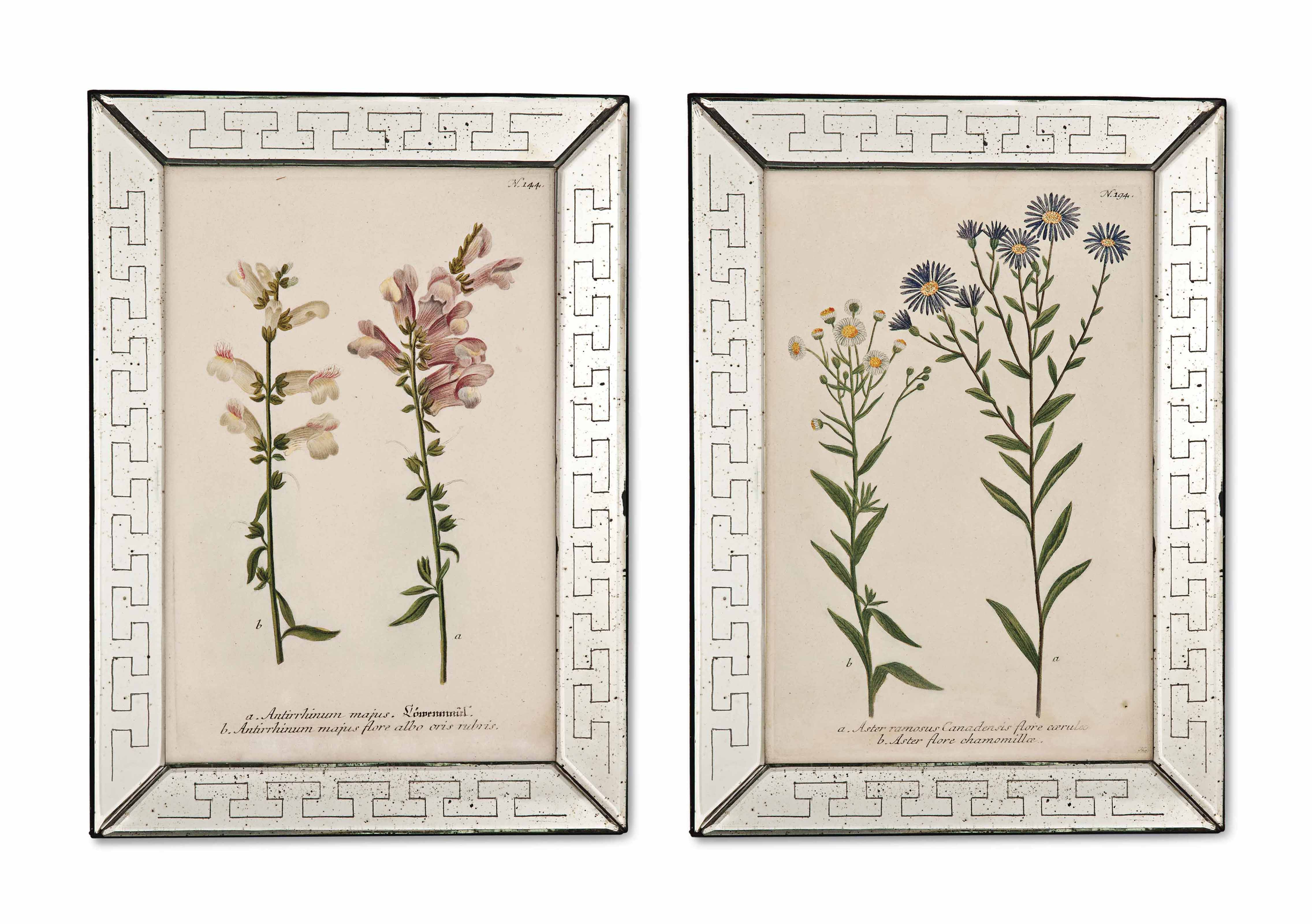 TWELVE HAND-COLOURED BOTANICAL ENGRAVINGS FROM WEINMANN'S 'PHYTANTHOZA ICONOGRAPHIA'