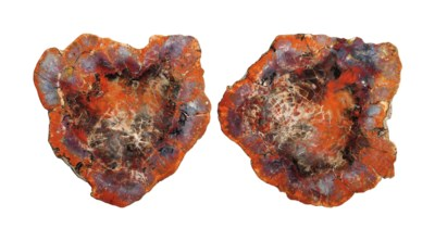 A PAIR OF SLICES OF PETRIFIED