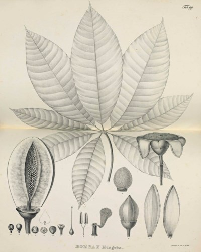 KARL VON MARTIUS (1794-1868) A
