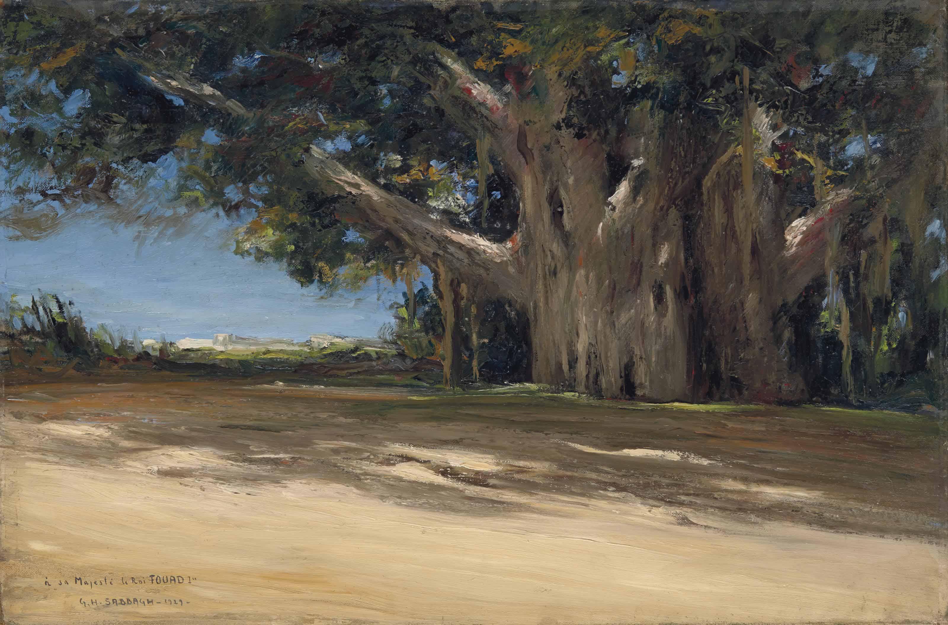 Les Sycomores du Vieux Caire (Old Cairo's Sycamore Trees)