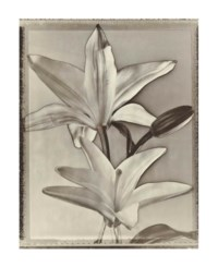 Two Lilies, 1996