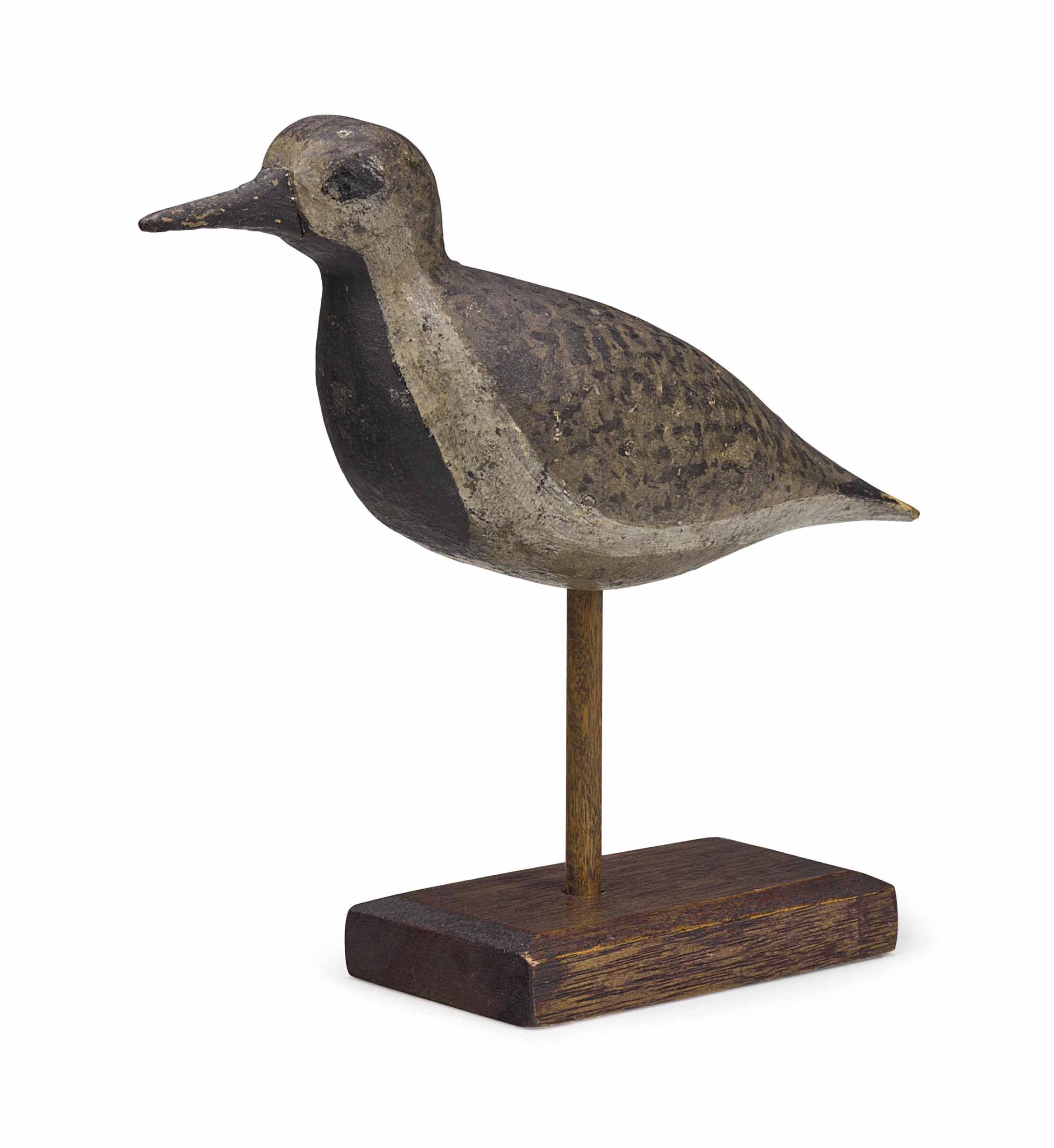A BLACK-BELLIED PLOVER