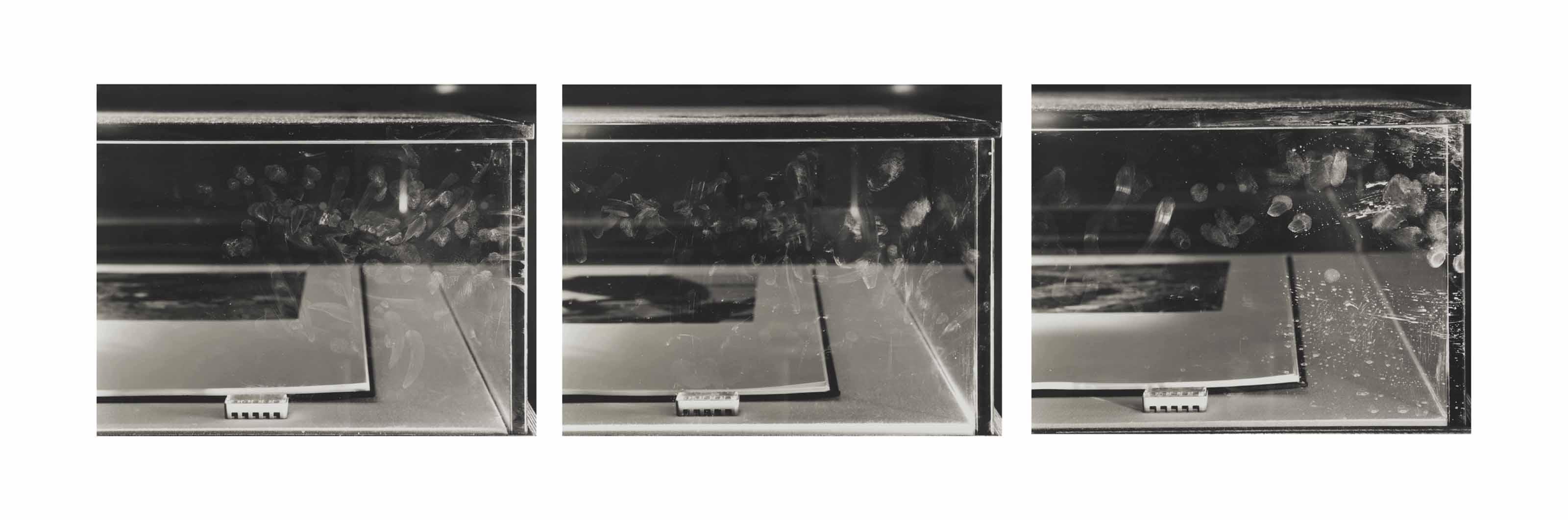 "Figure I, Accretions, January 16, 1992 (Cyprus, 1990 [detail]) ""Carnegie International 1991,"" The Carnegie Museum of Art, Pittsburgh, Pa., October 19, 1991-February 16, 1992  Figure II. Accretions, January 16, 1992 (Guinea, 1990 [detail]) ""Carnegie International 1991,"" The Carnegie Museum of Art, Pittsburgh, Pa., October 19, 1991-February 16, 1992  Figure III. Accretions, January 16, 1992 (Iran, 1990 [detail]) ""Carnegie International 1991,"" The Carnegie Museum of Art, Pittsburgh, Pa., October 19, 1991-February 16, 1992"