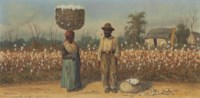 The Cotton Field