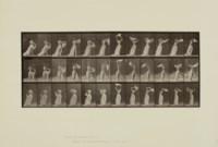 Animal Locomotion, 1887