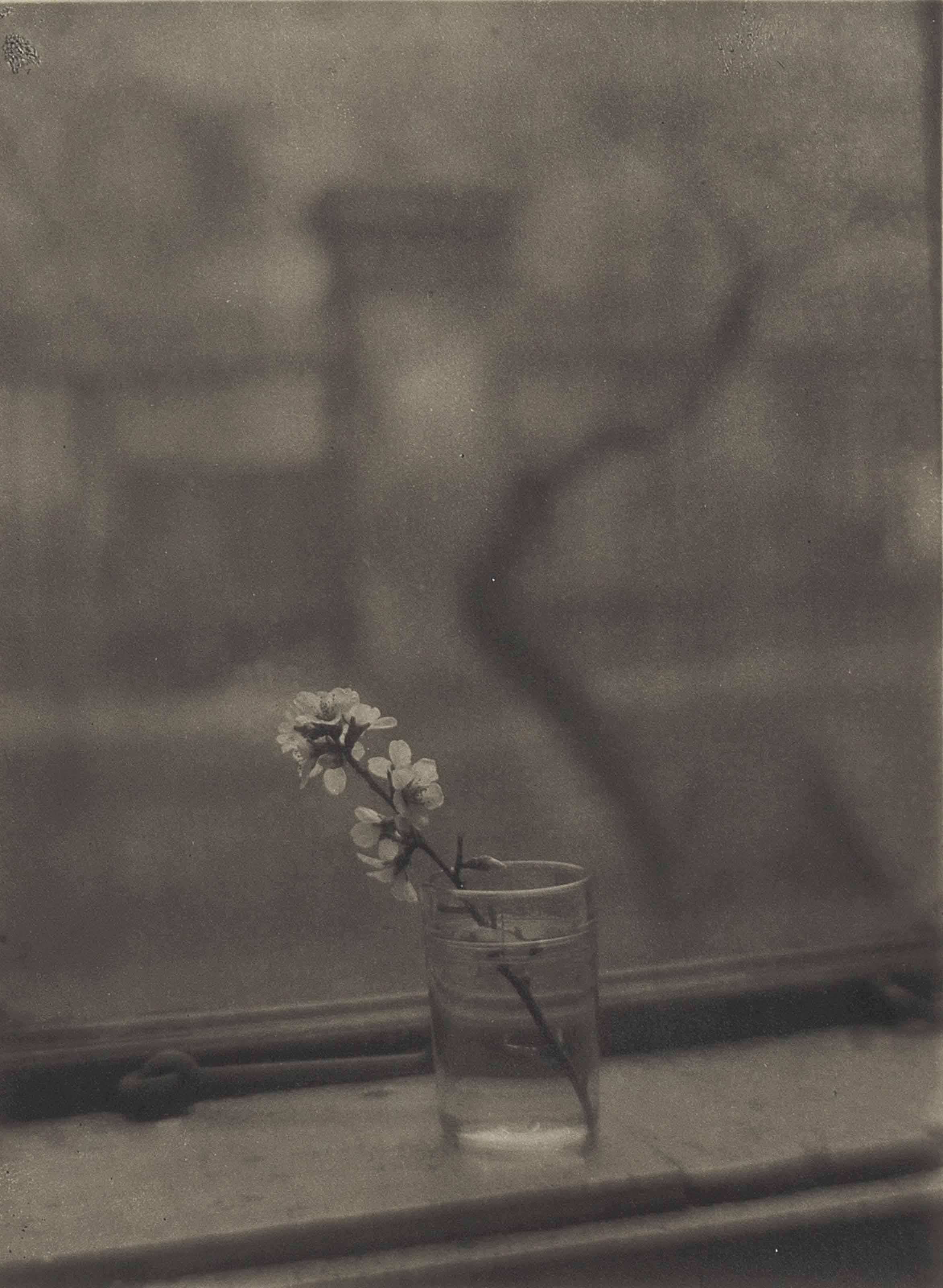 Bouquet, 1950