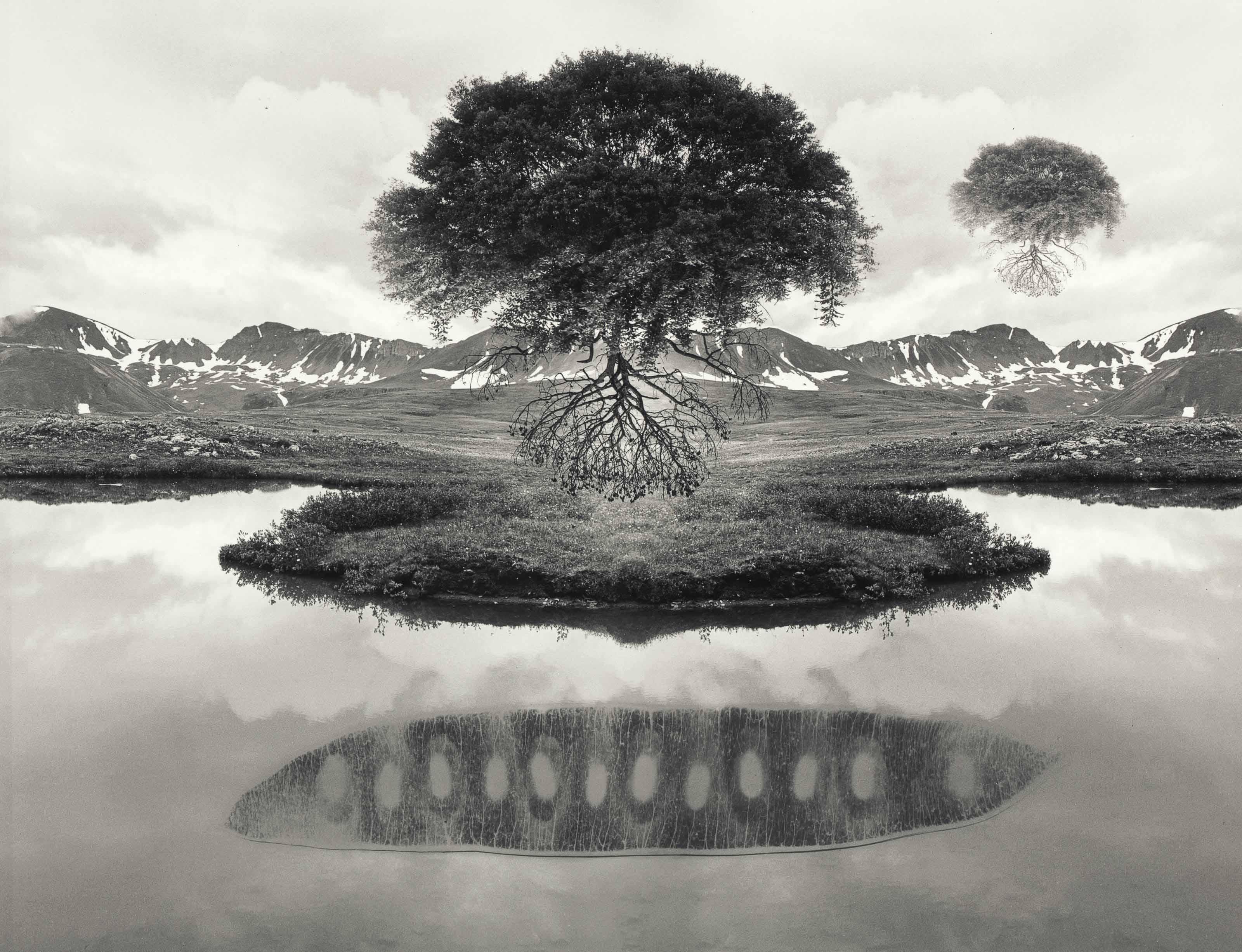 Untitled, (Floating Trees), 1969