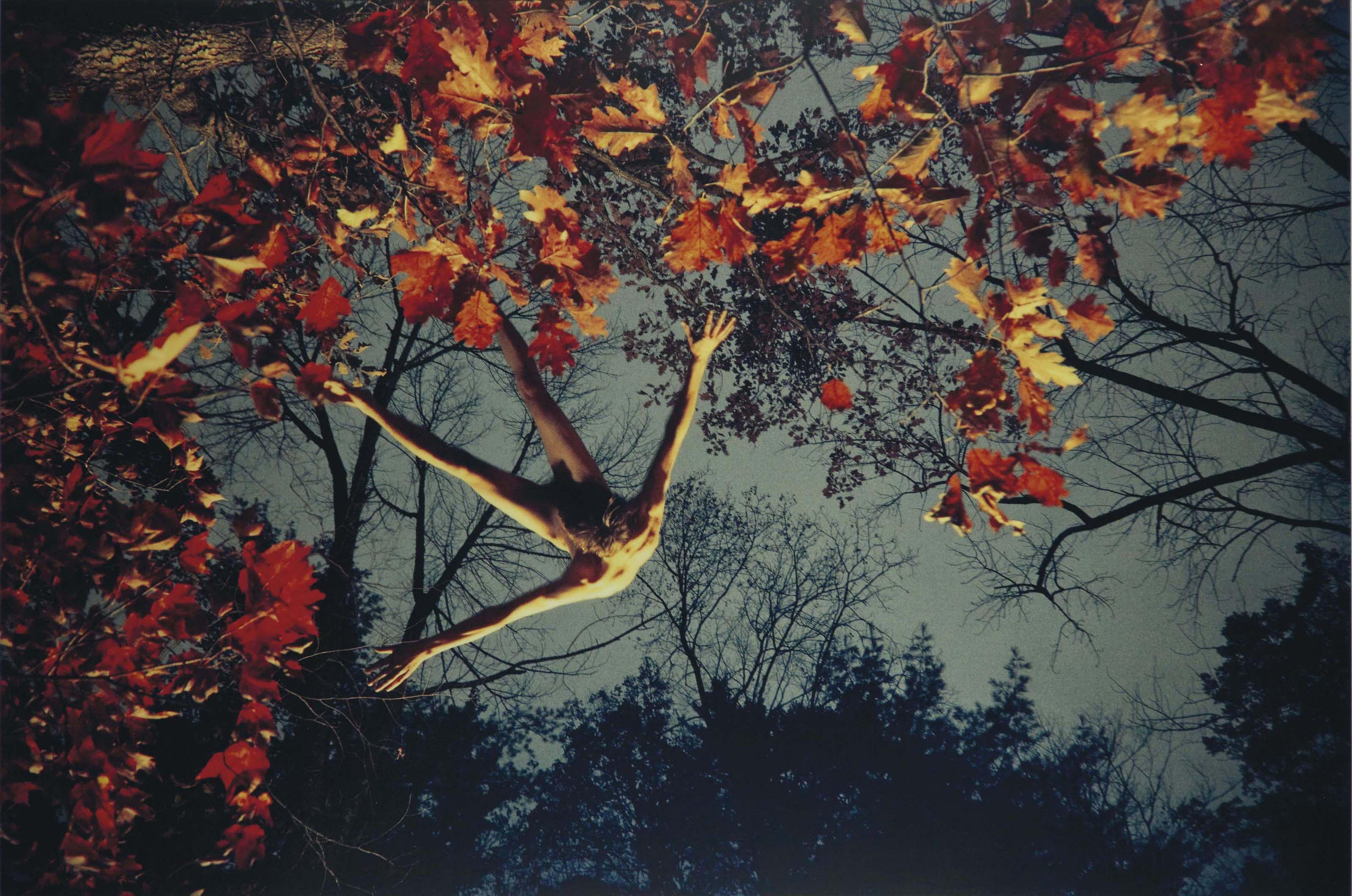 Jake (Fall Foliage), 2011