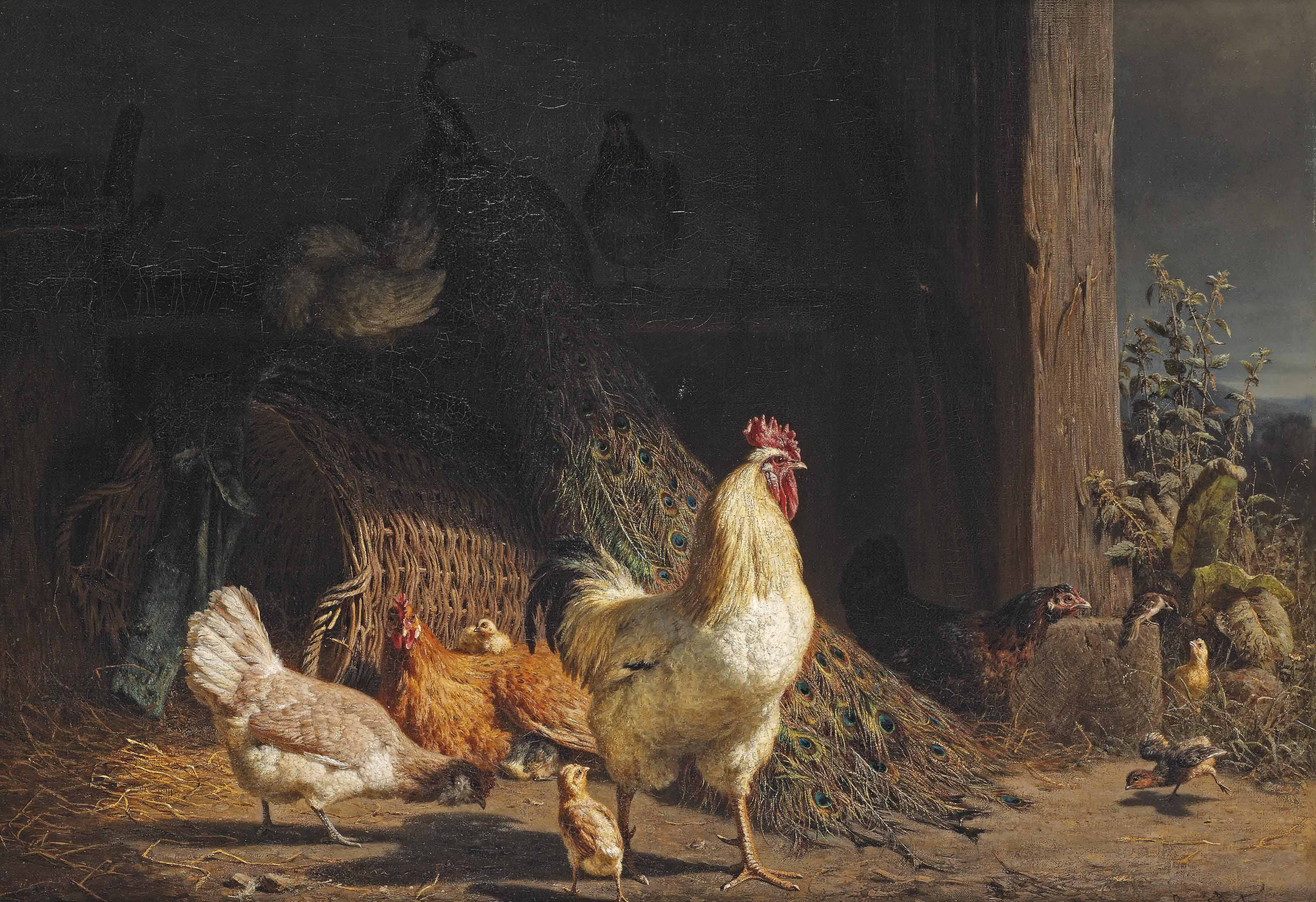 A peacock, a rooster and chicks in a stable