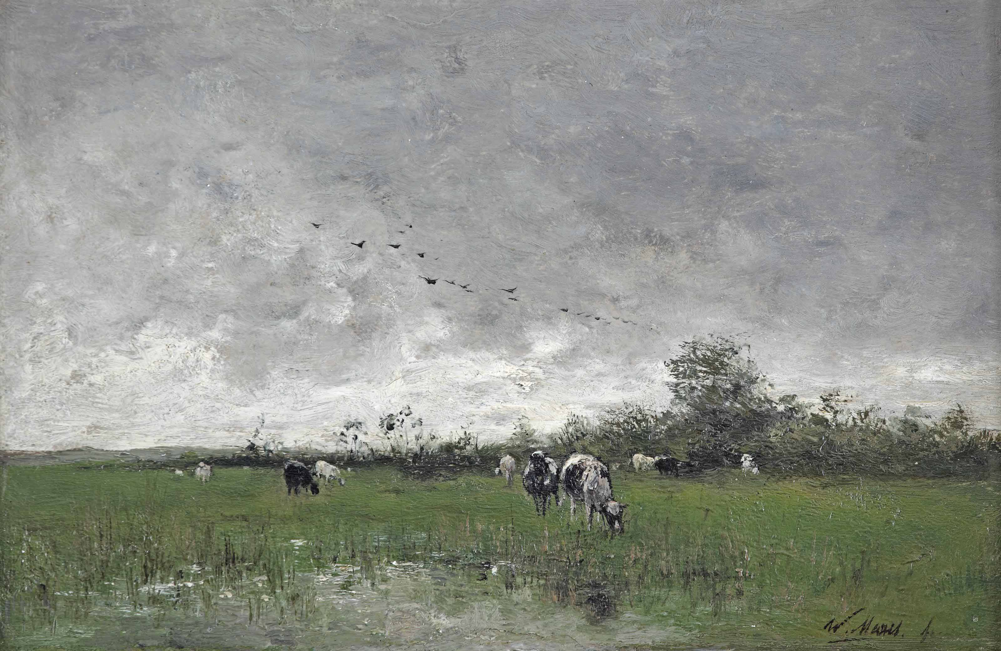 Cows grazing in the polder