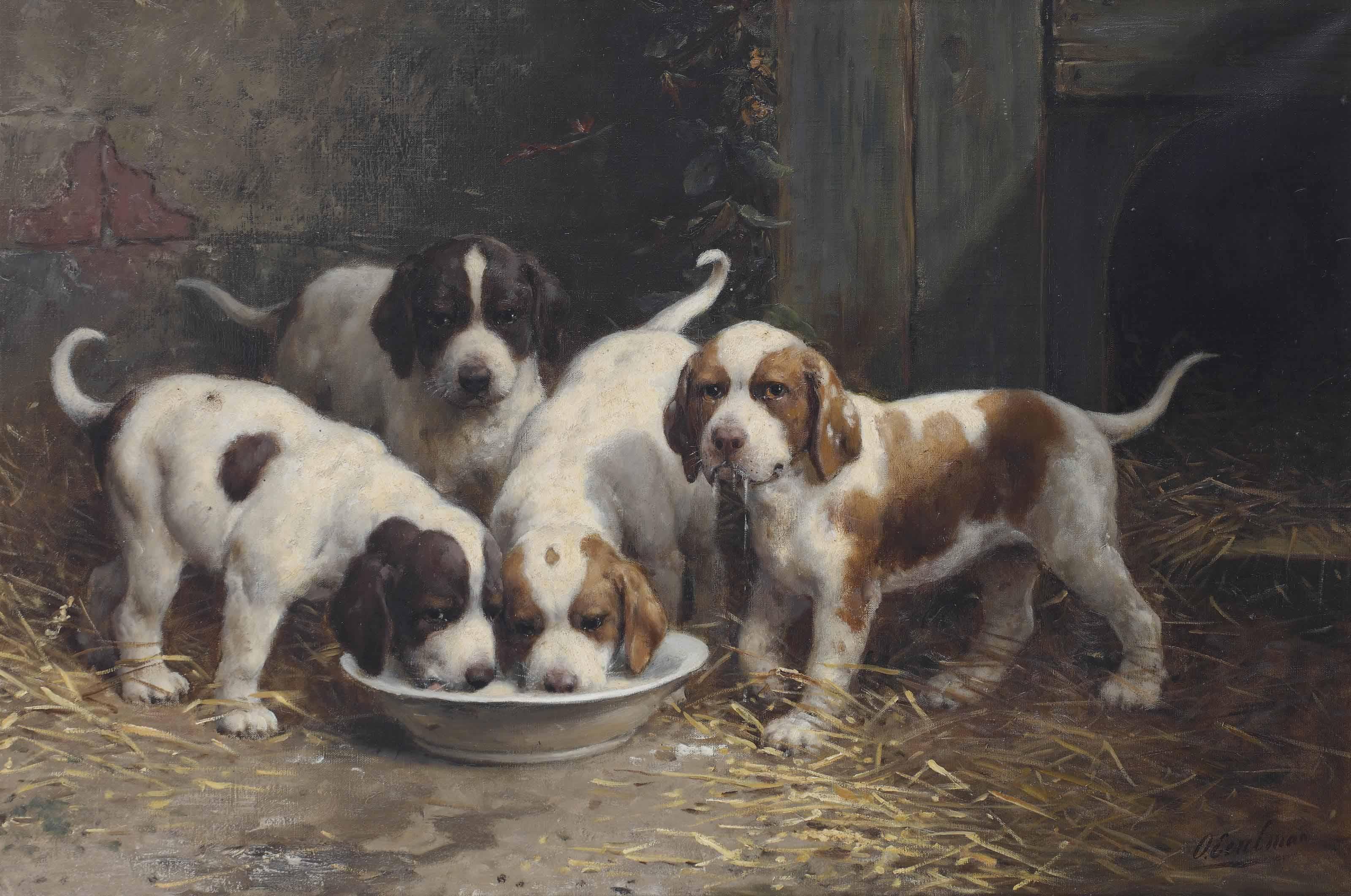 Saint Bernard puppies drinking milk