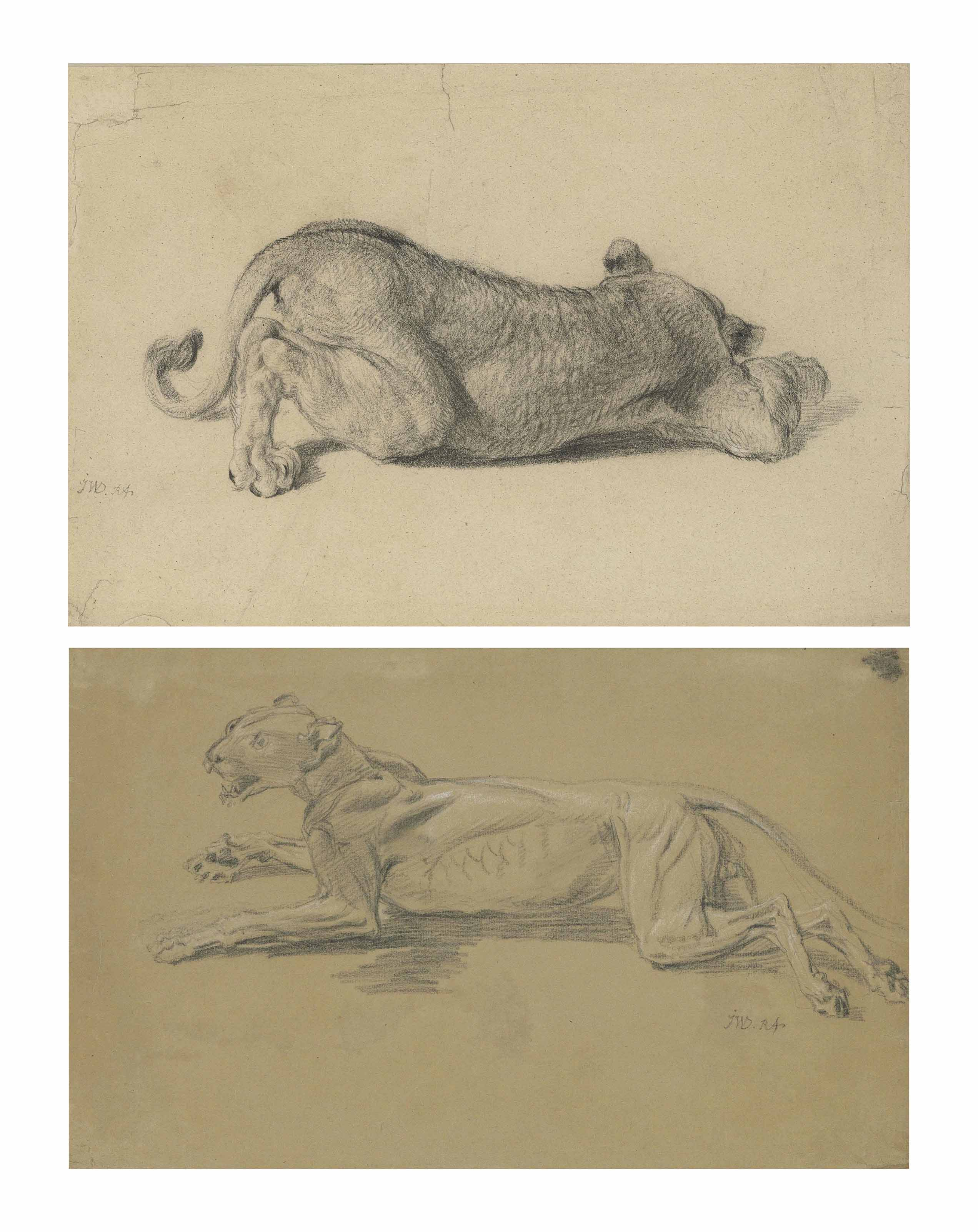 A study of a lioness sleeping; and Two écorché studies of a lioness