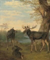 Elk in a river landscape