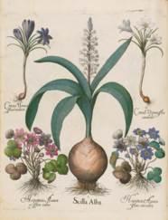 BESLER, Basilius (1561-1629).