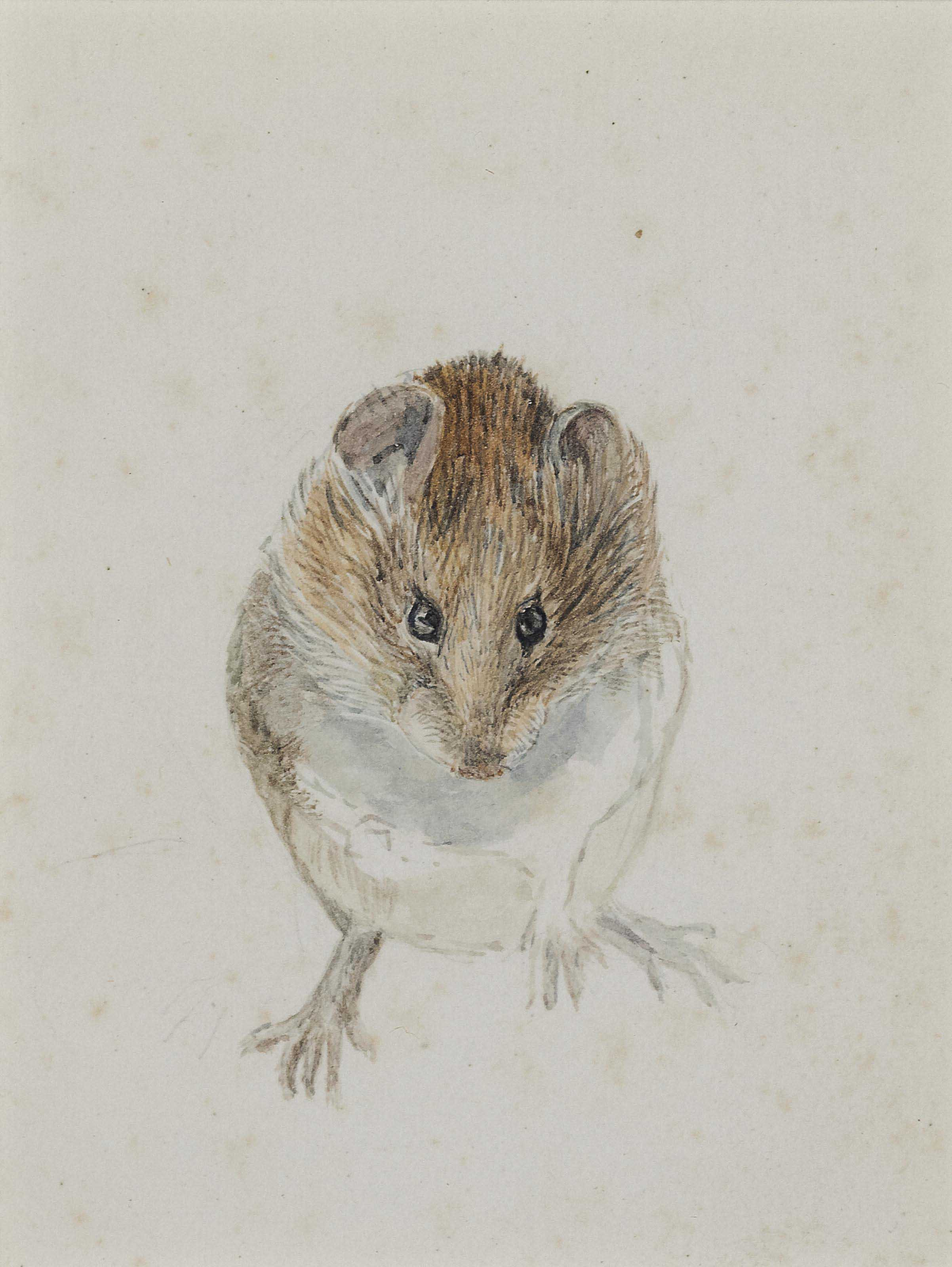 Study of a Mouse