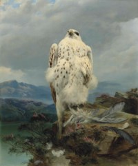 A gyrfalcon in an extensive mountainous landscape