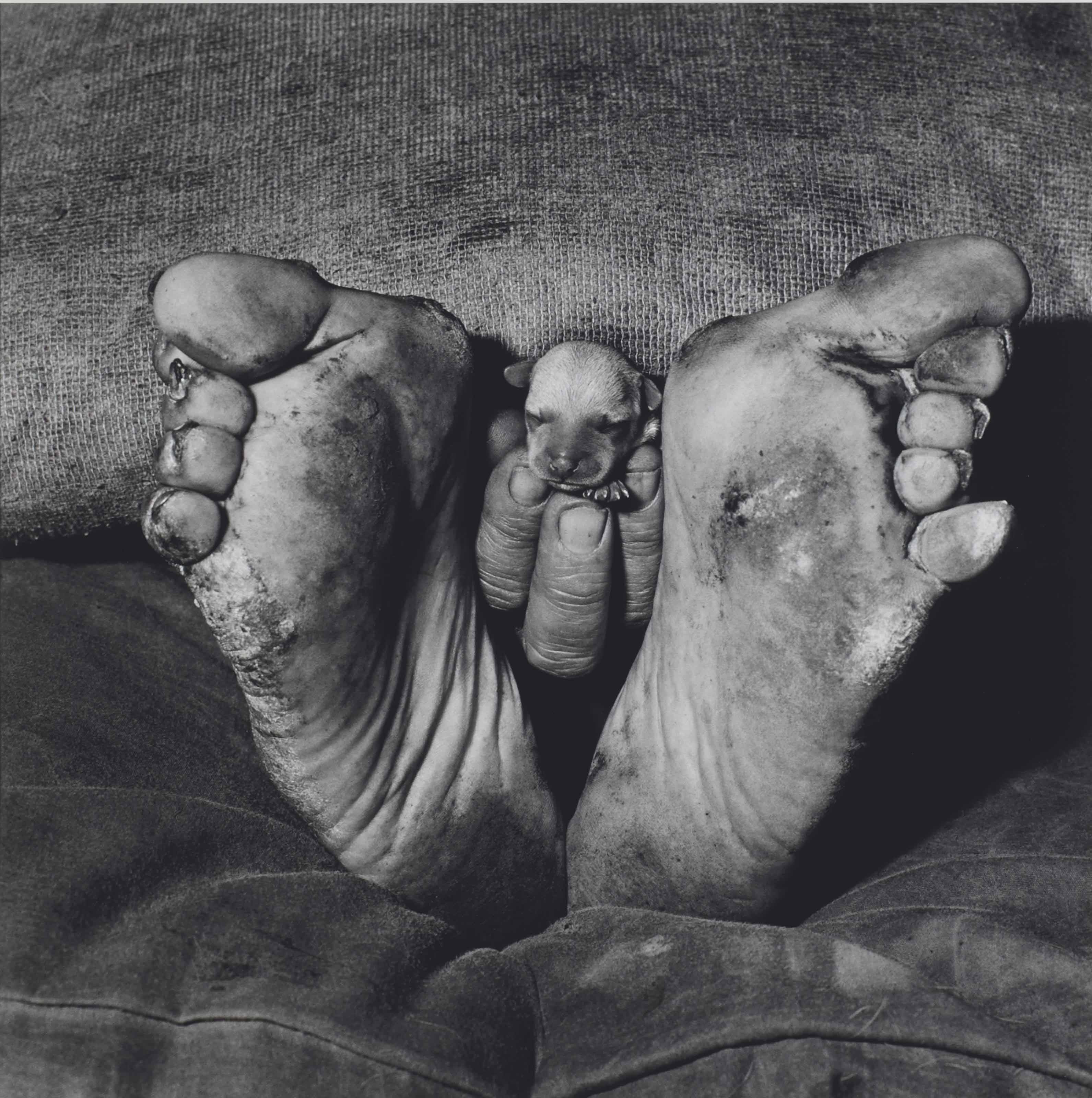 Puppy Between Feet, 1999