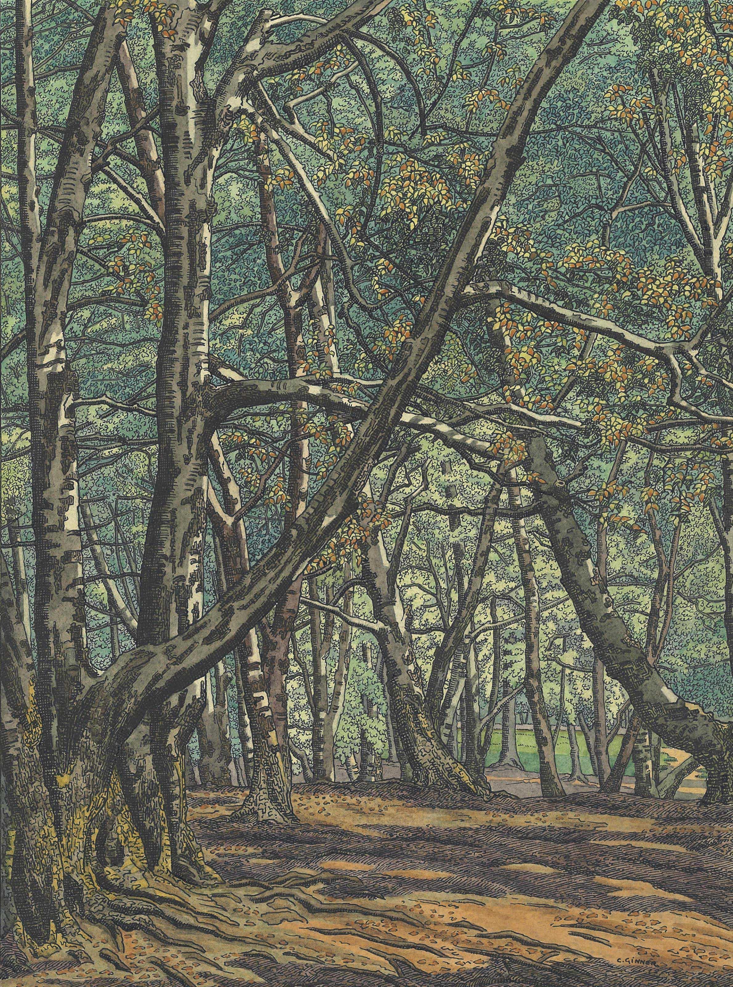 Wildwood - Hampstead Heath