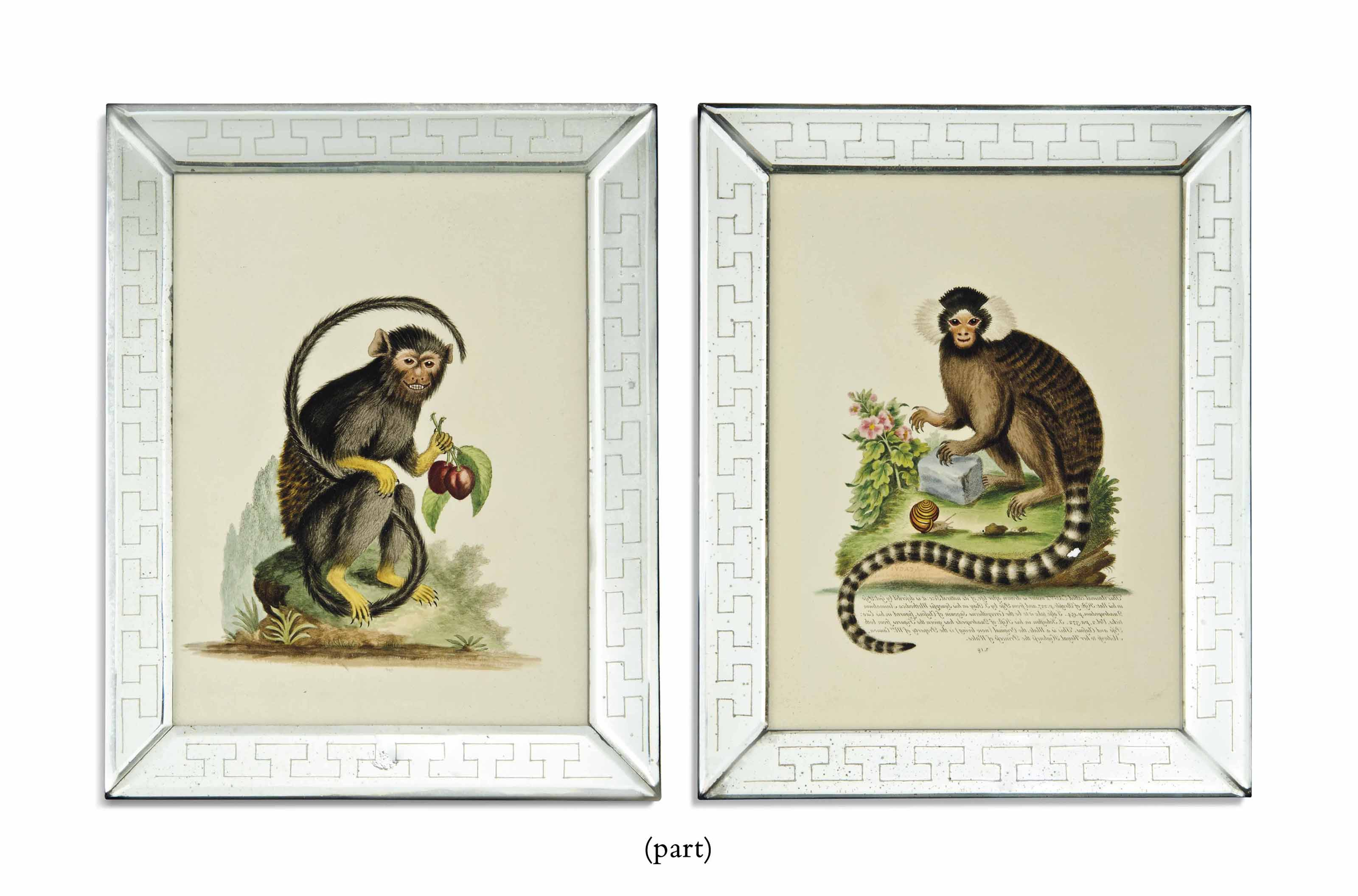 TWELVE HAND-COLOURED ENGRAVINGS OF MONKEYS