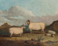 A prize ram with a ewe in a hilly landscape