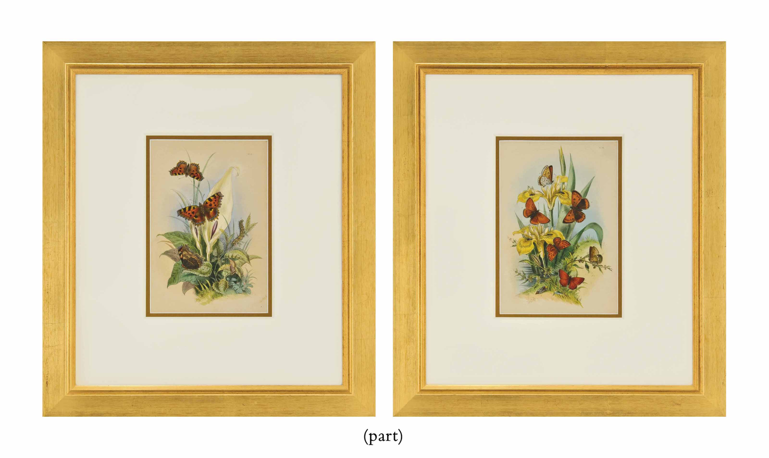 SIXTEEN COLOURED LITHOGRAPHS F