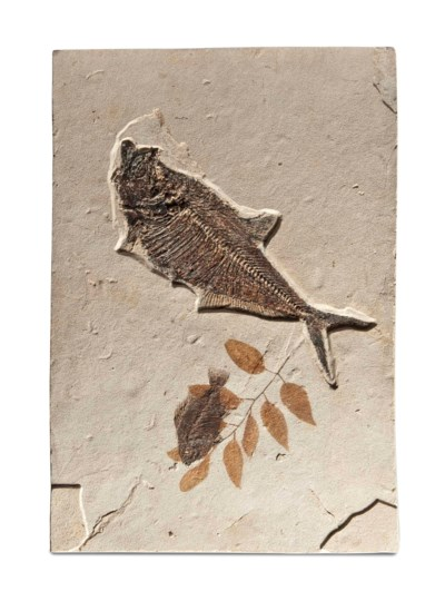 A FOSSIL FISH AND LEAF PLAQUE