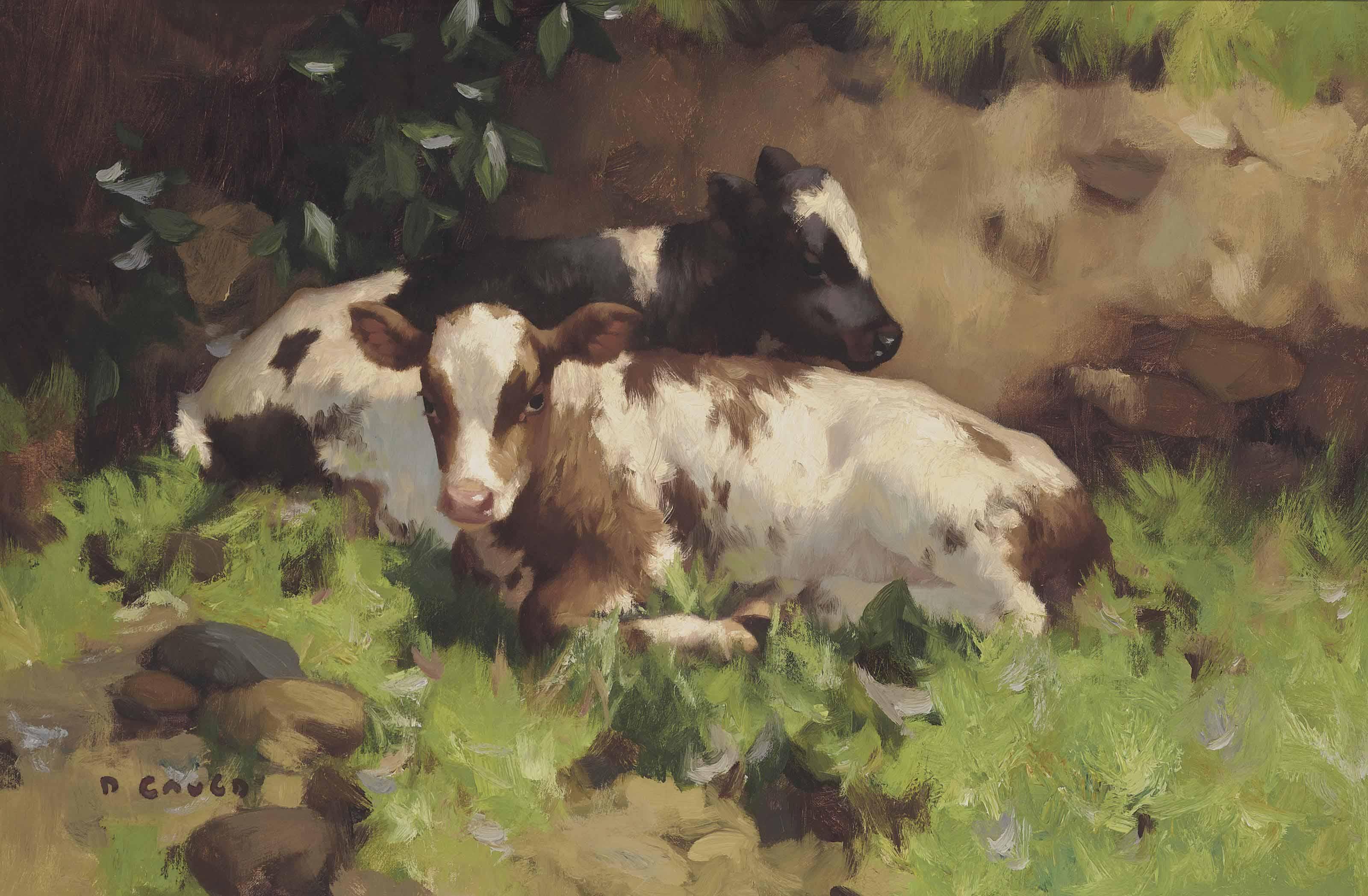 Ayrshire calves
