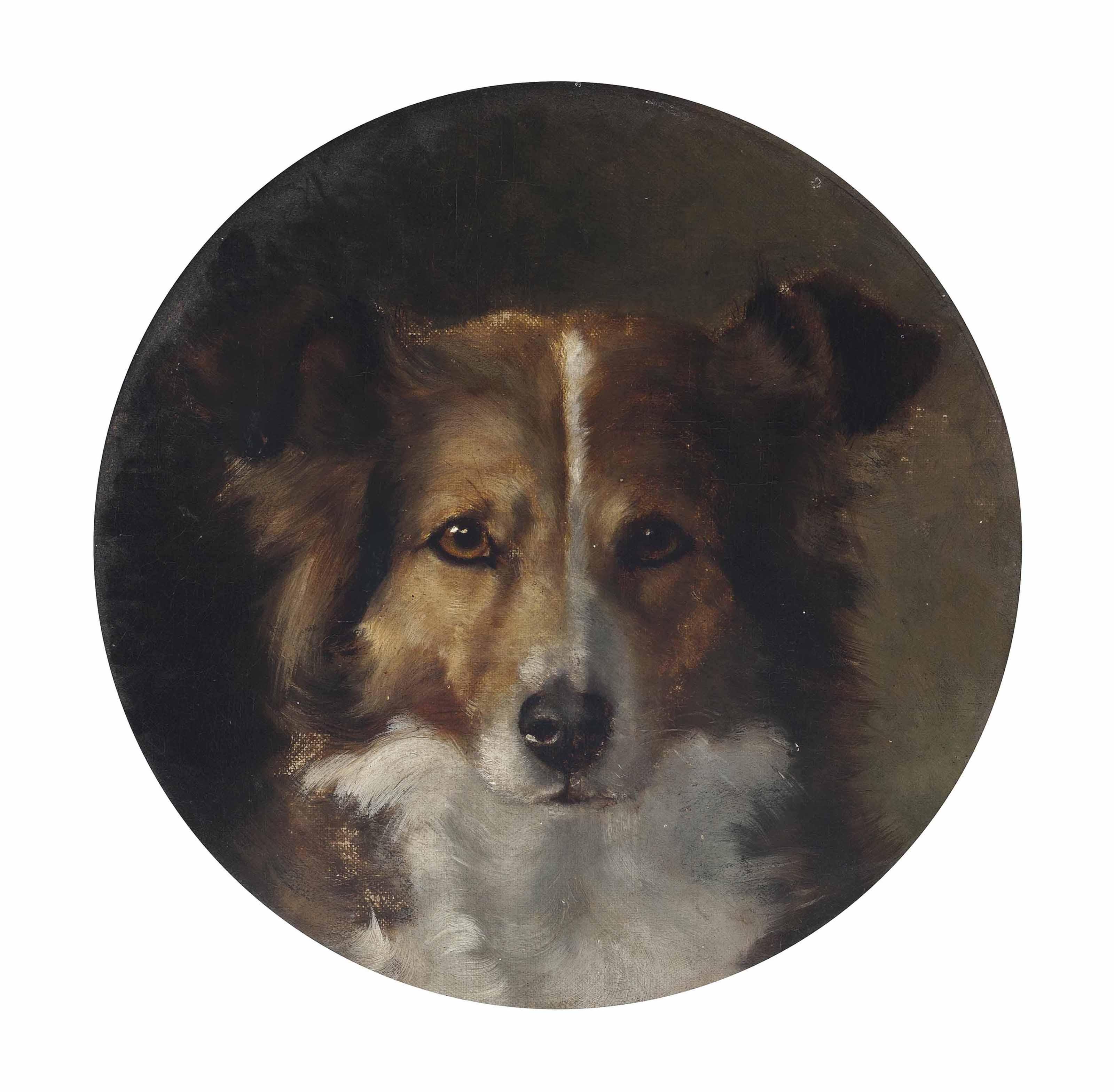 A faithful collie