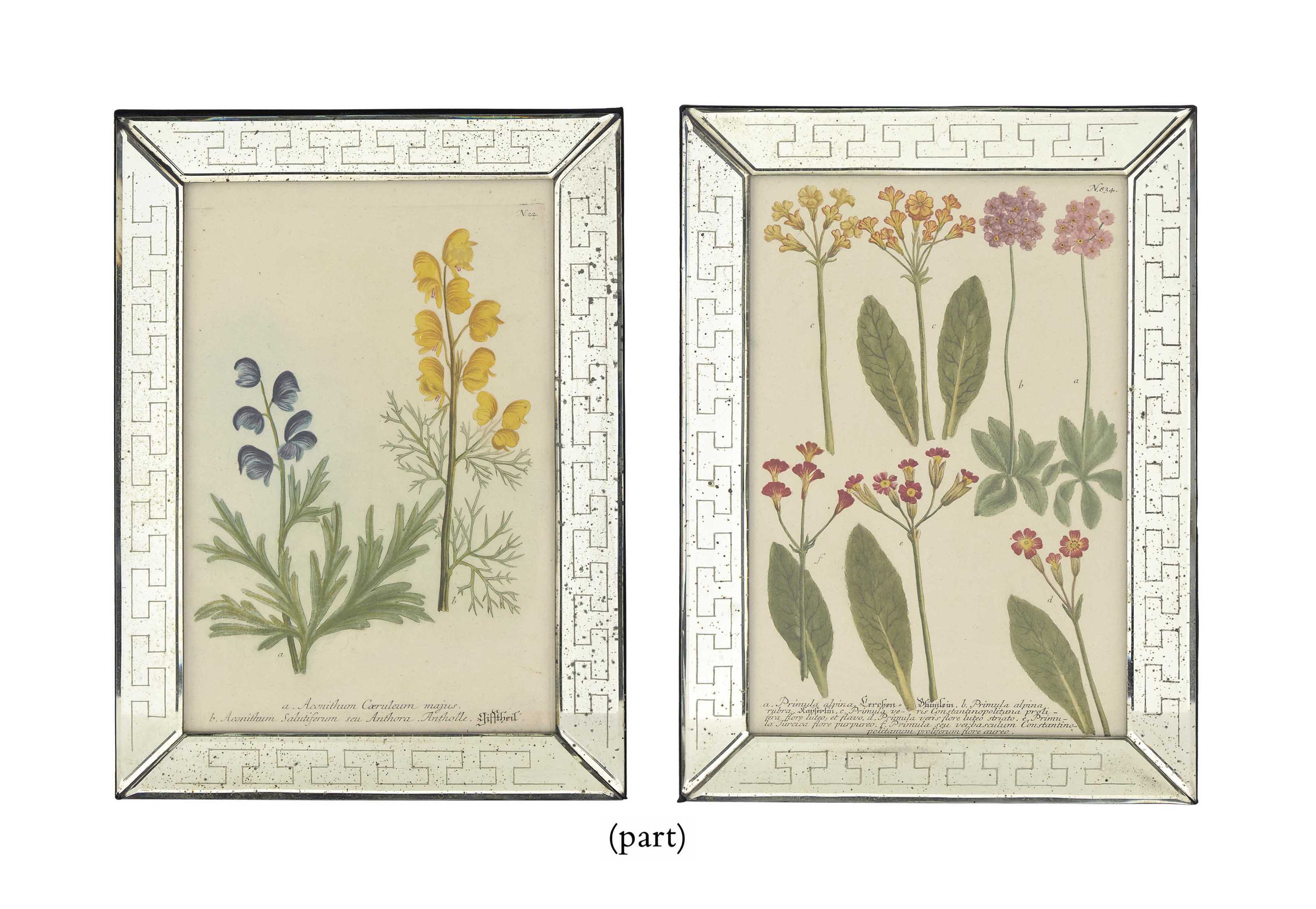 TWELVE HAND-COLOURED BOTANICAL