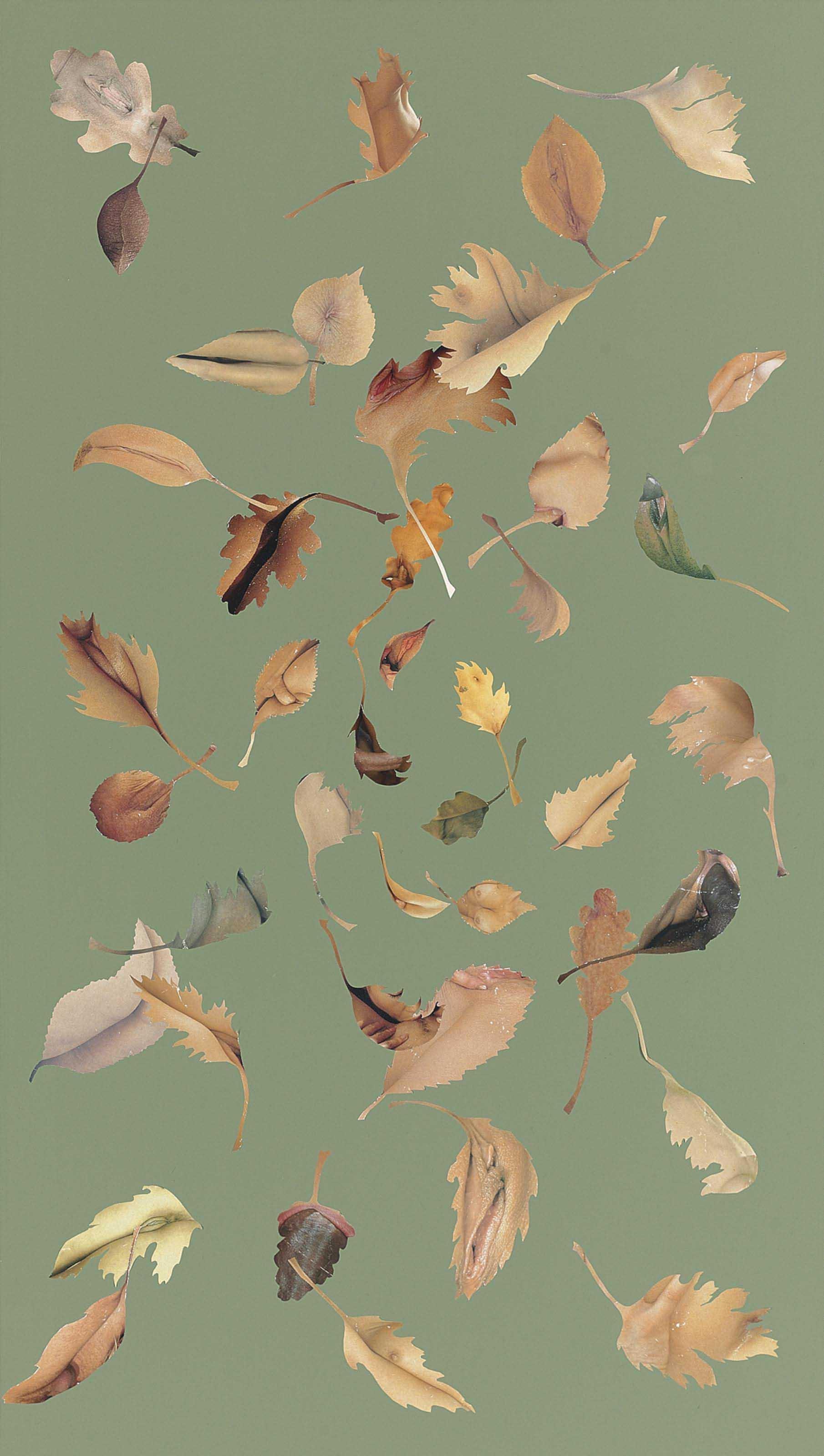 Leaf Study Olive 2