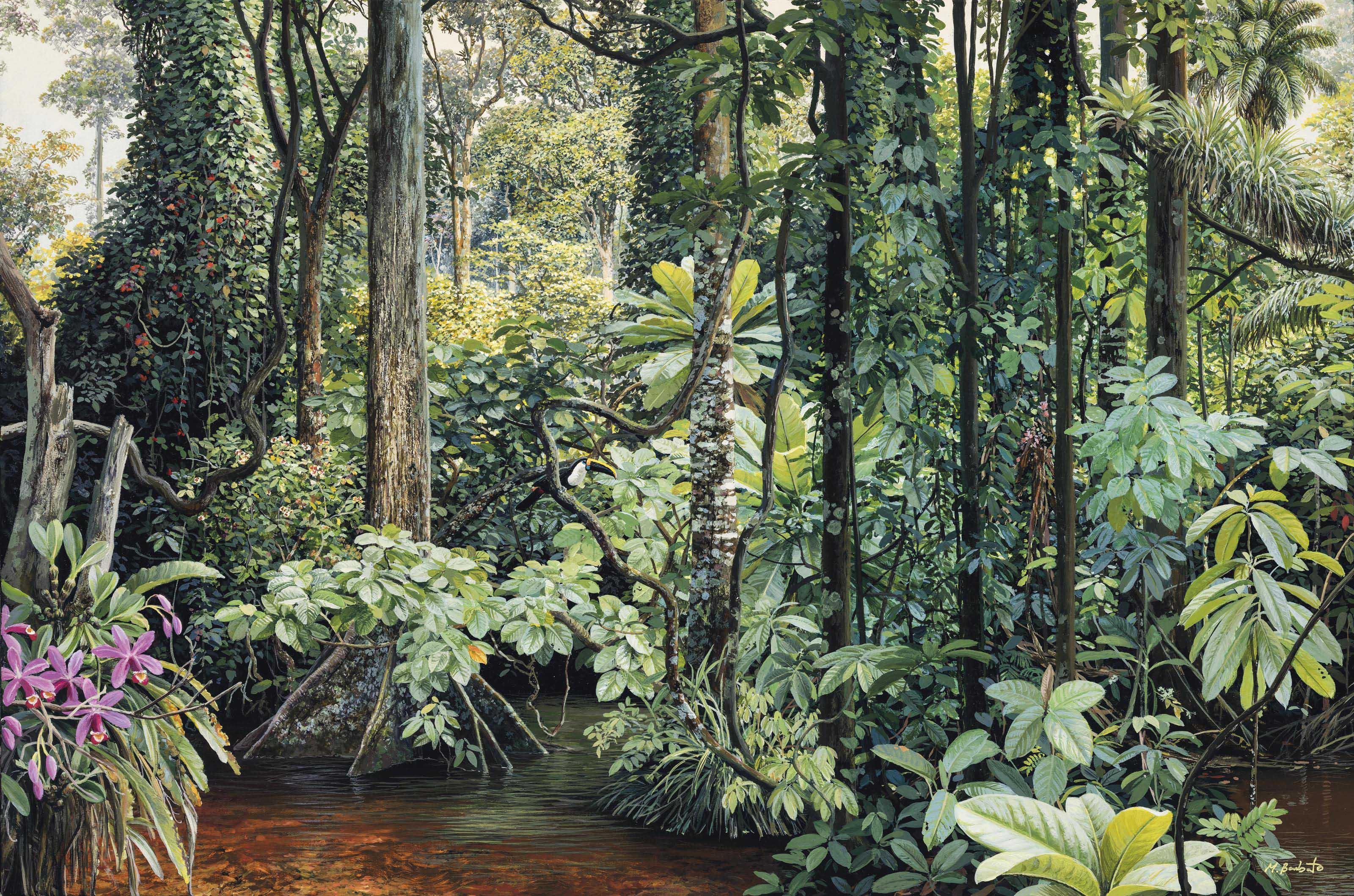 Selva Pluvial