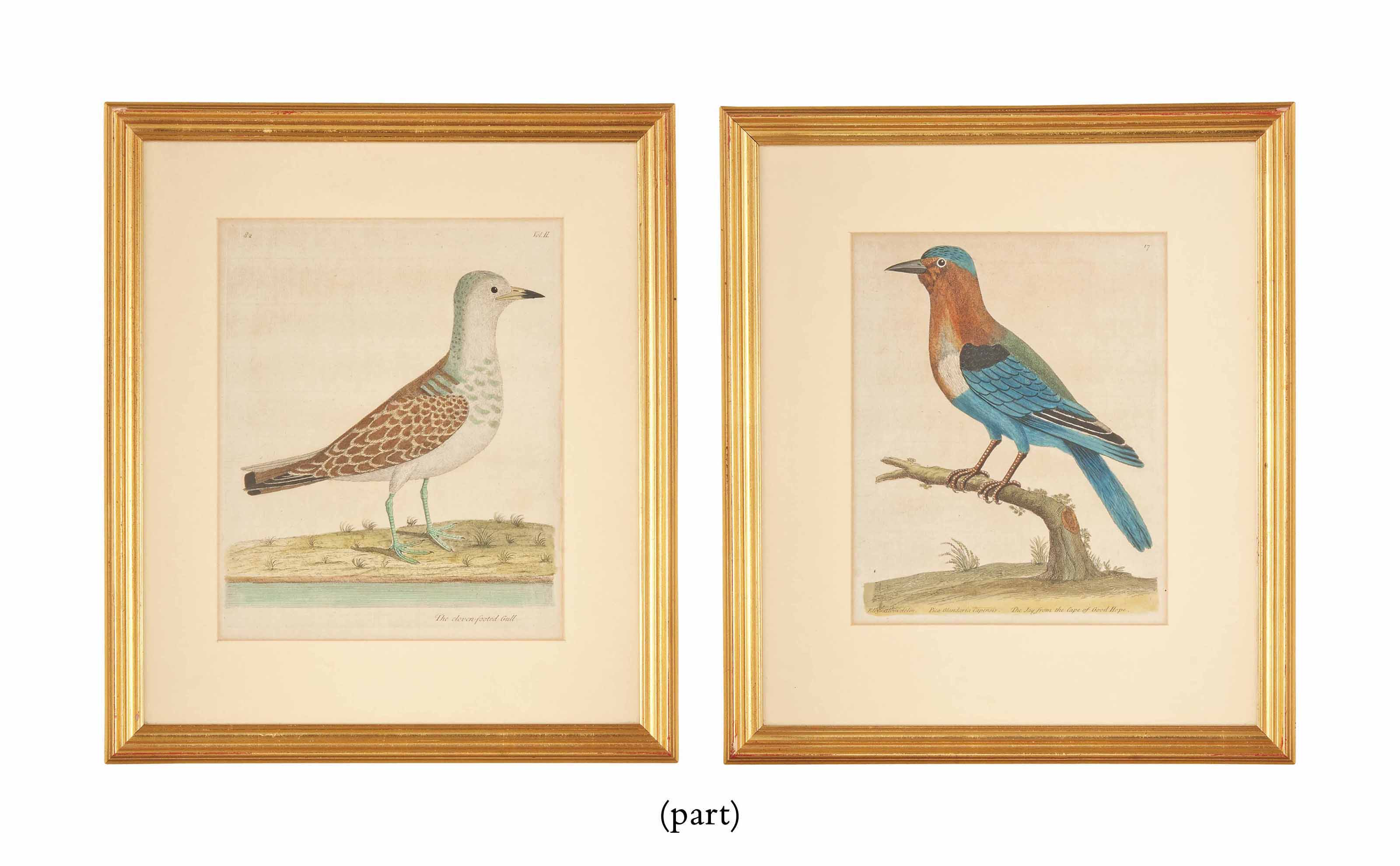 SIXTEEN COLOURED ENGRAVINGS OF BIRDS