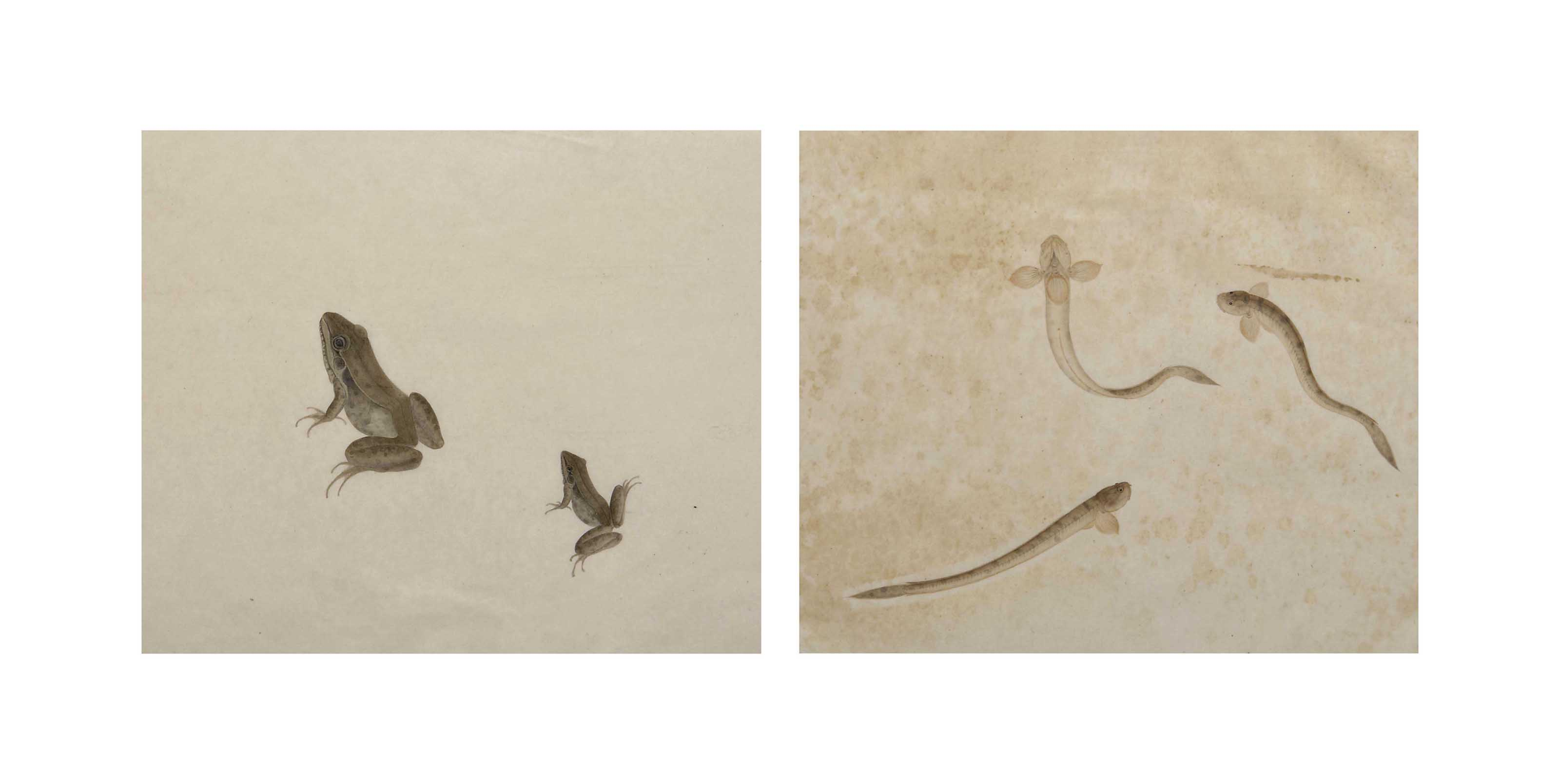 TWO STUDIES OF INDIAN FAUNA: A