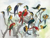 Parrots (Heaven of Parrots)