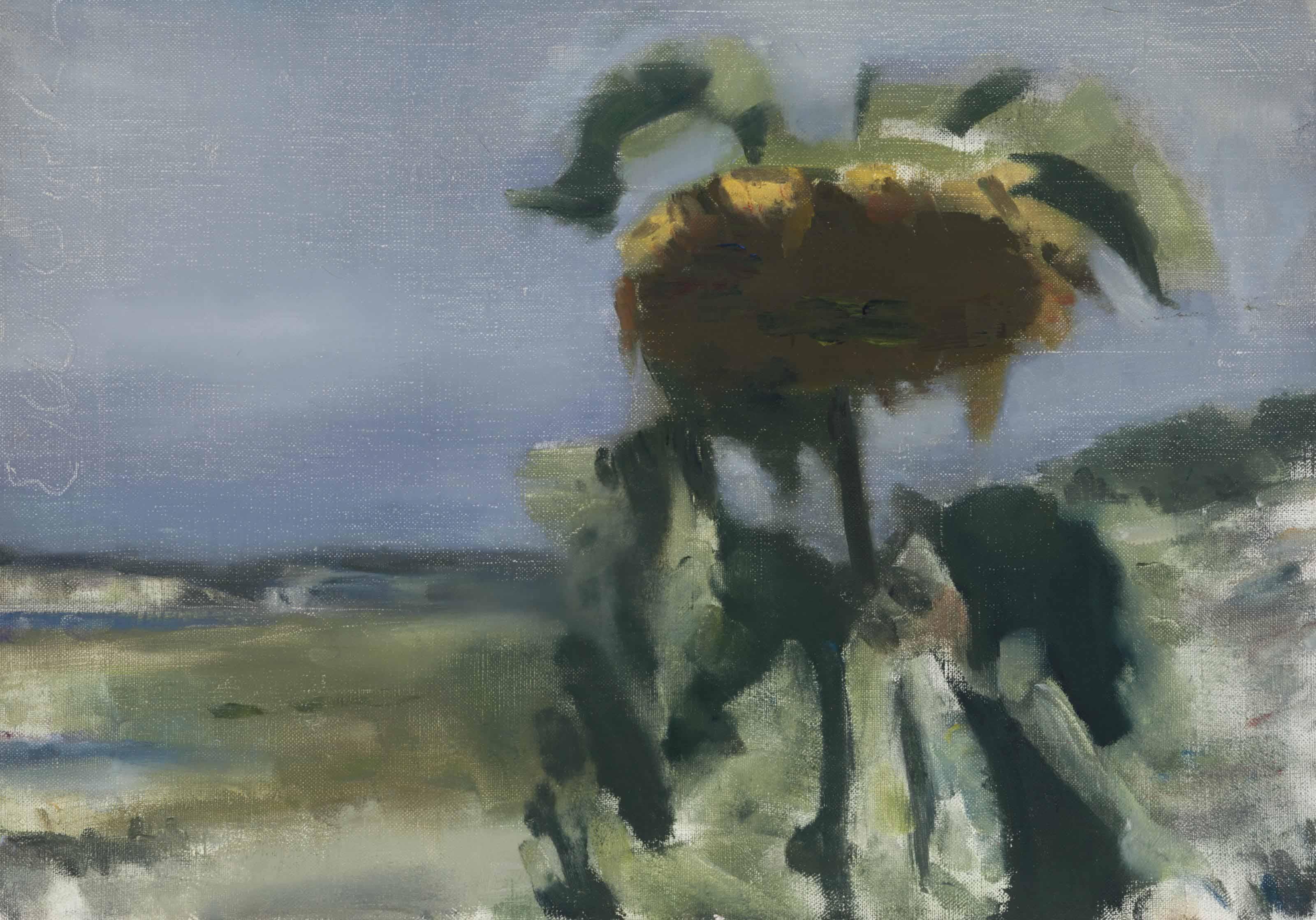 Sunflower at Wellfleet