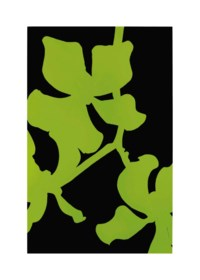 Green and Black Orchid