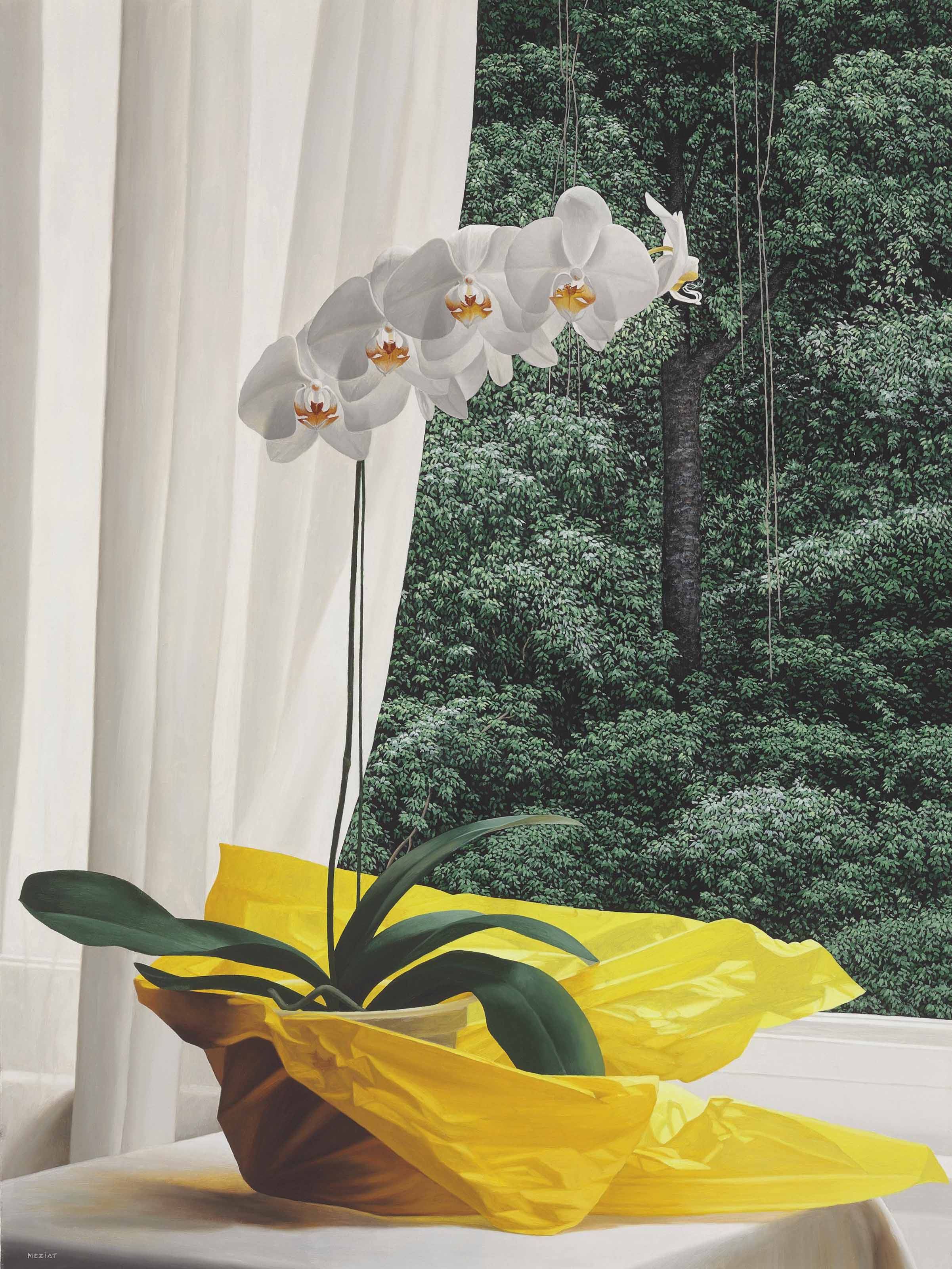 Orquídea com amarelo