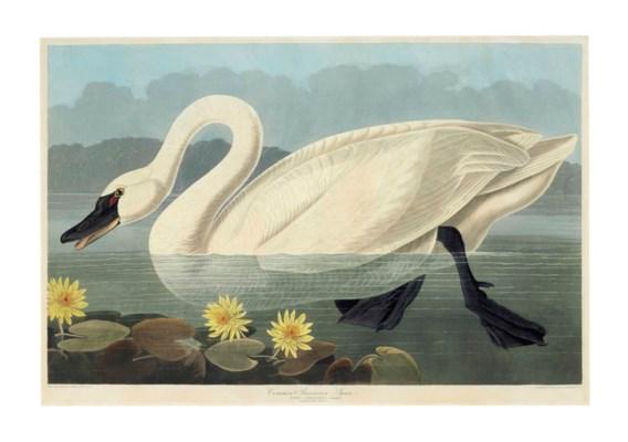 AFTER JOHN JAMES AUDUBON (1785