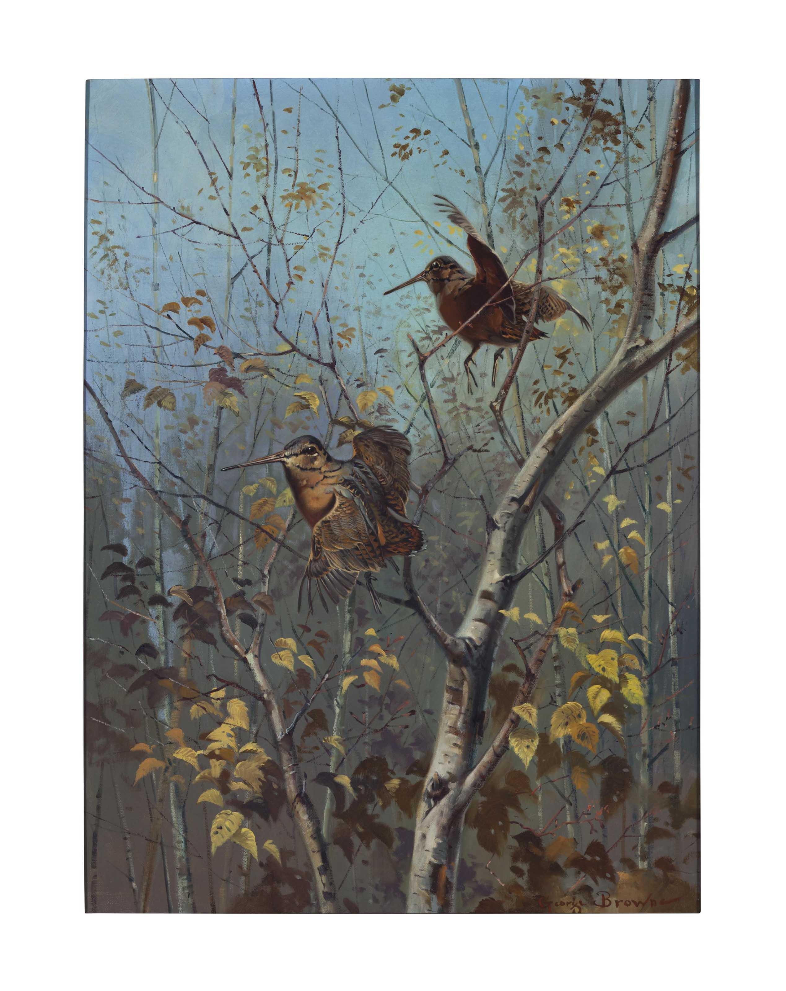 Autumn Cover, Woodcock