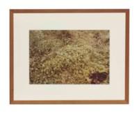 Untitled, from Silueta Series, Iowa, 1979