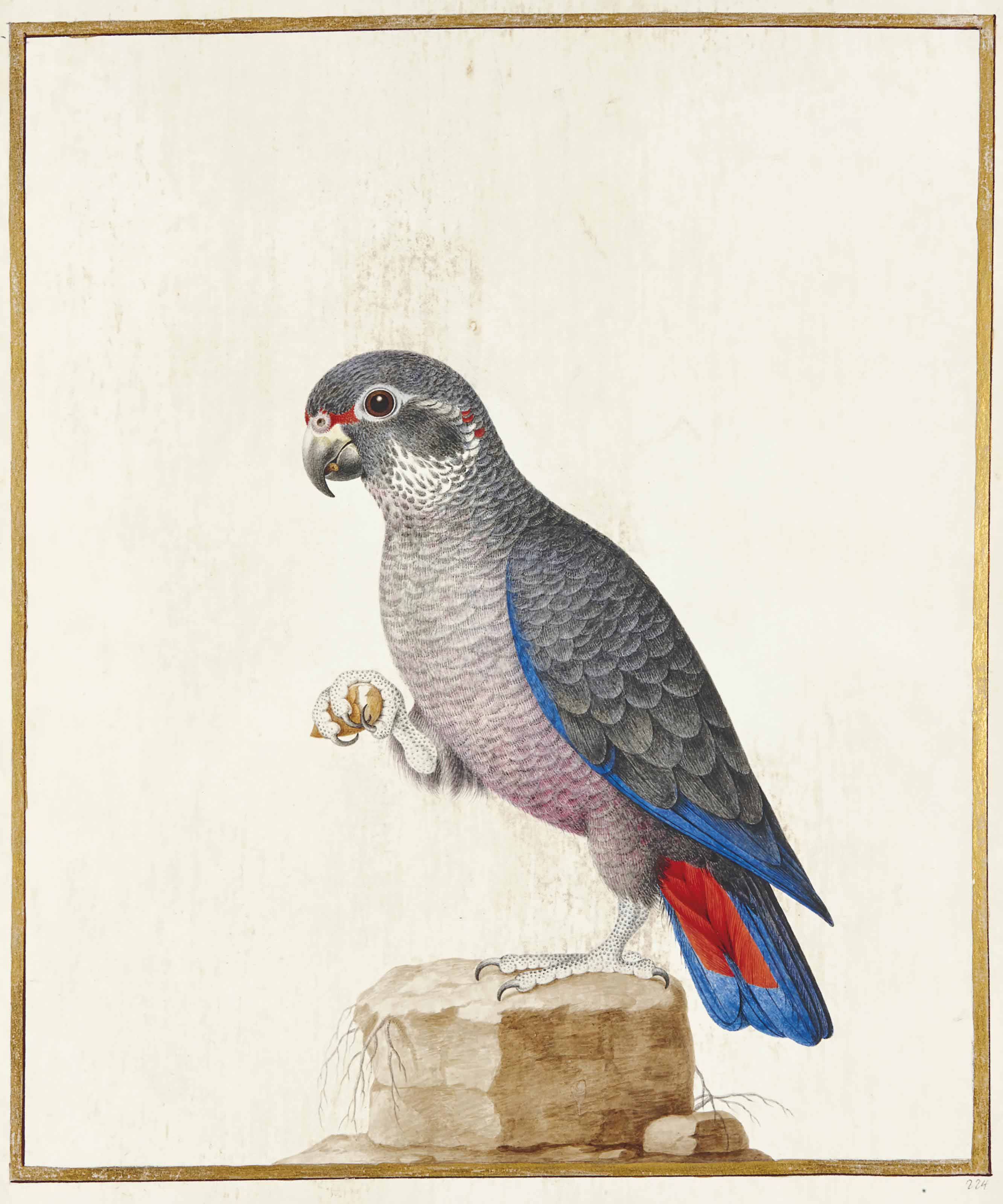 NICOLAS ROBERT (ORLÉANS 1614-1