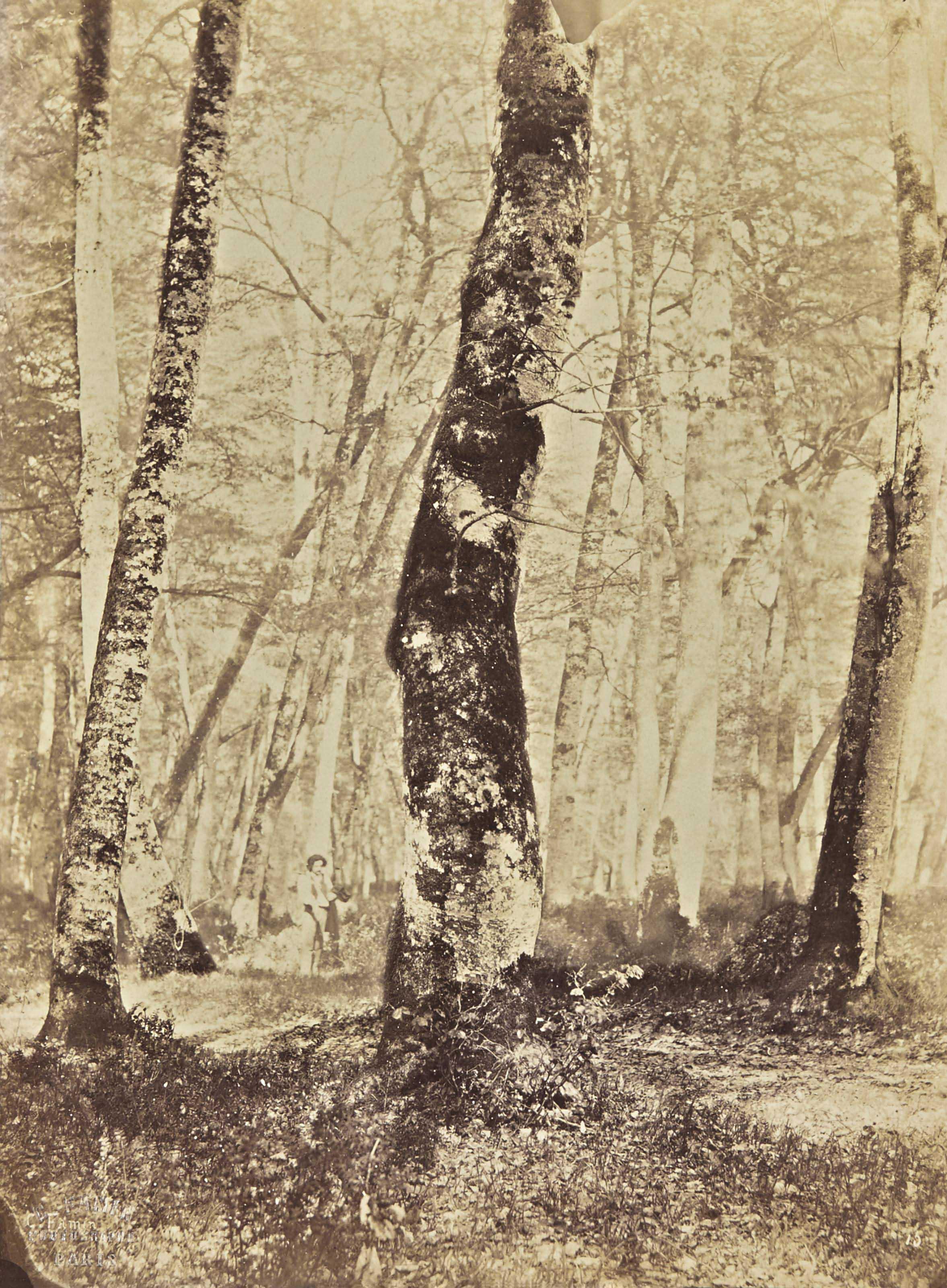 En forêt de Fontainebleau, 1874