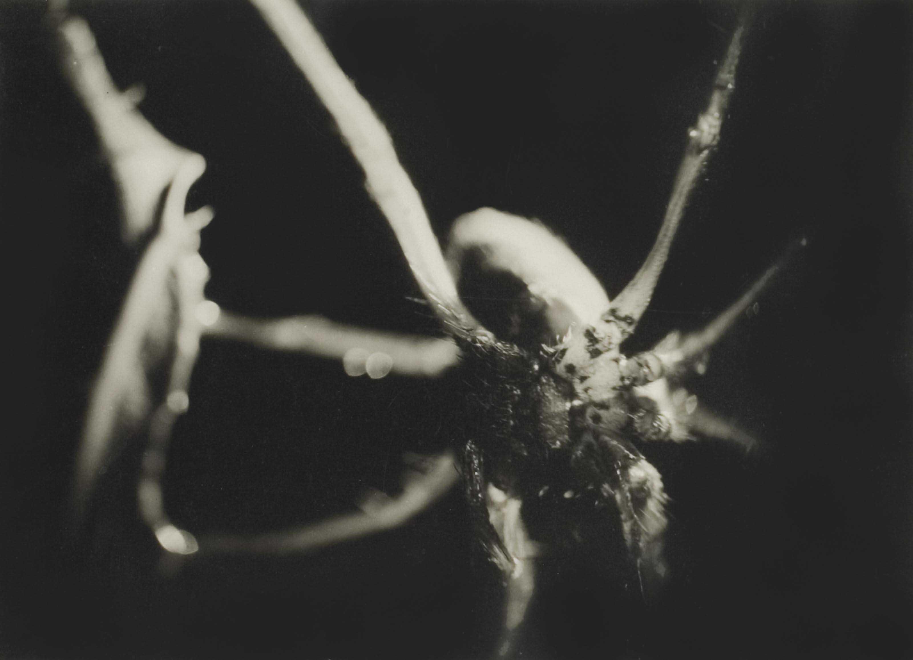 Araignée, 1929
