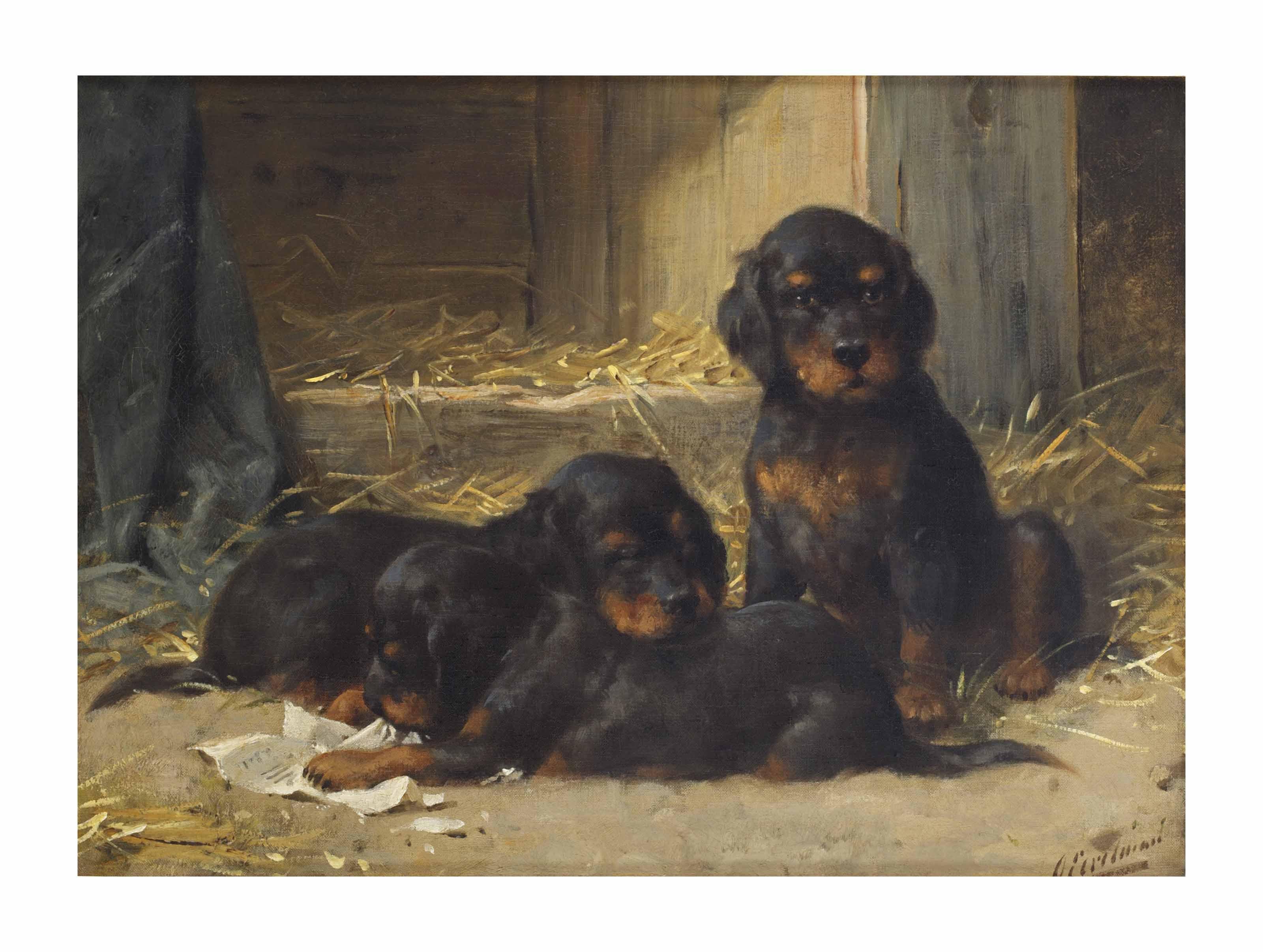 Gordon Setters puppies