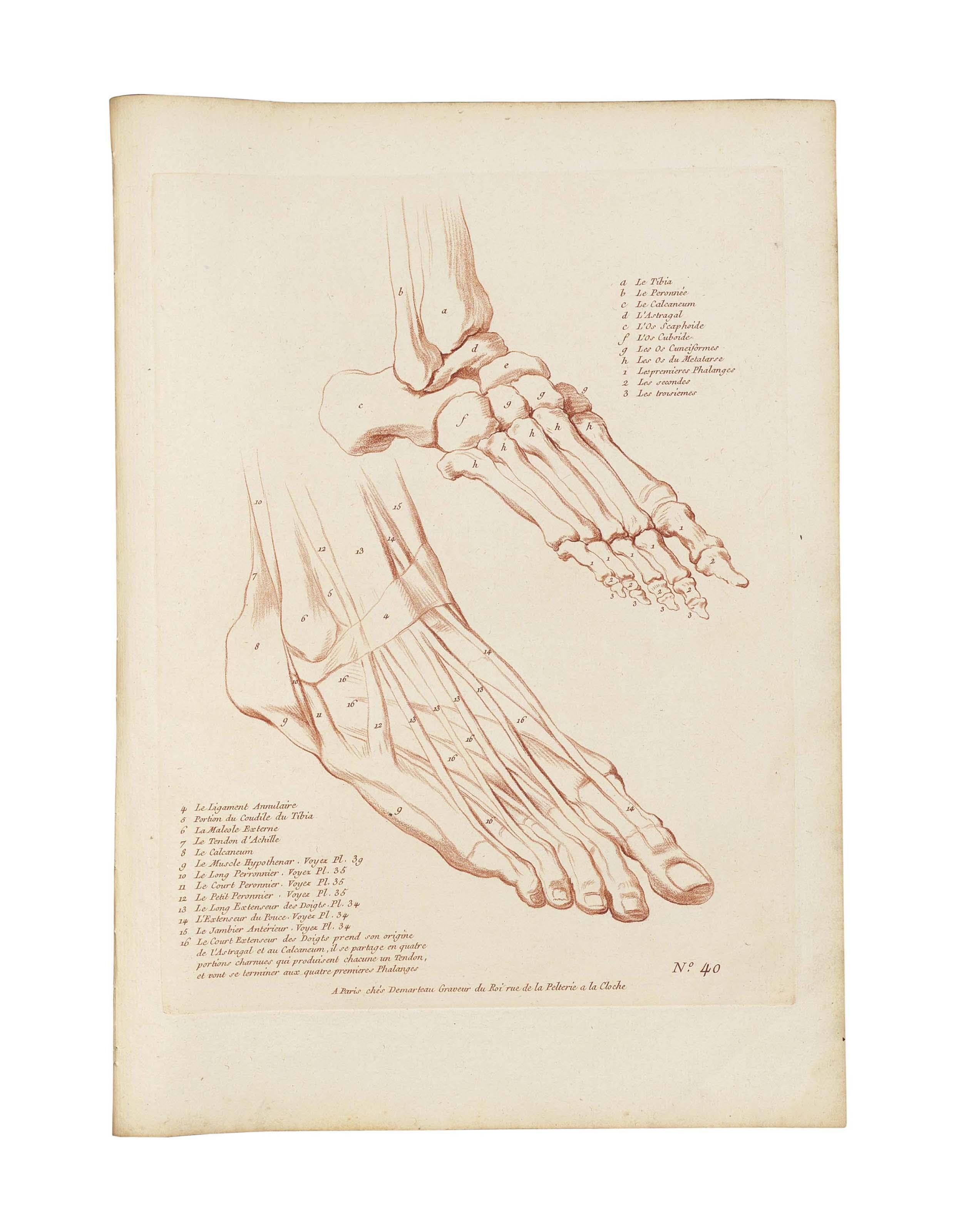 MONNET, Charles (1732-after 1808). Etudes d\'anatomie a l\'usage des ...