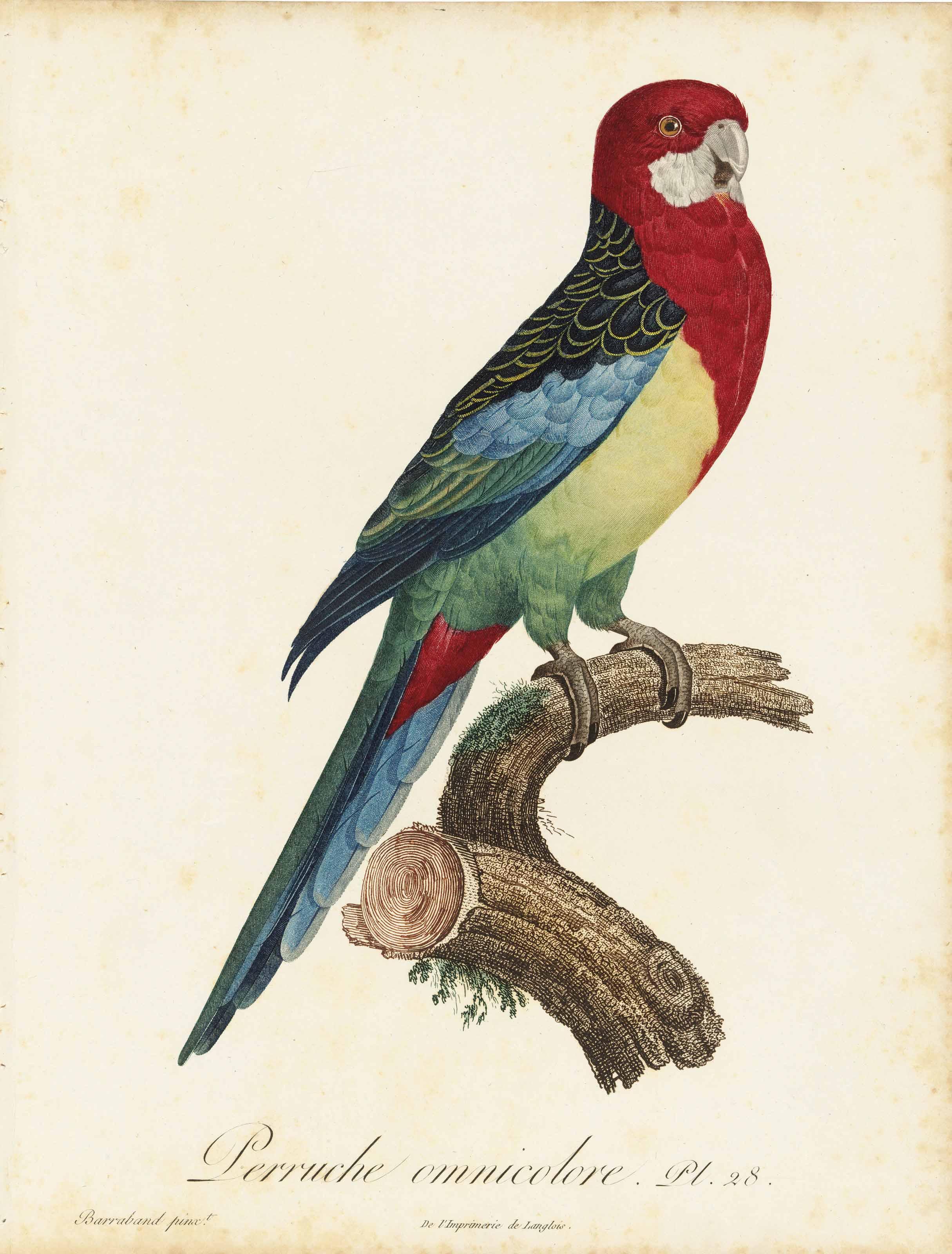LEVAILLANT, François (1753-1824). Histoire naturelle des perroquets. Paris: Levrault frères and Levrault, Schoell & Co., 1801-1805.