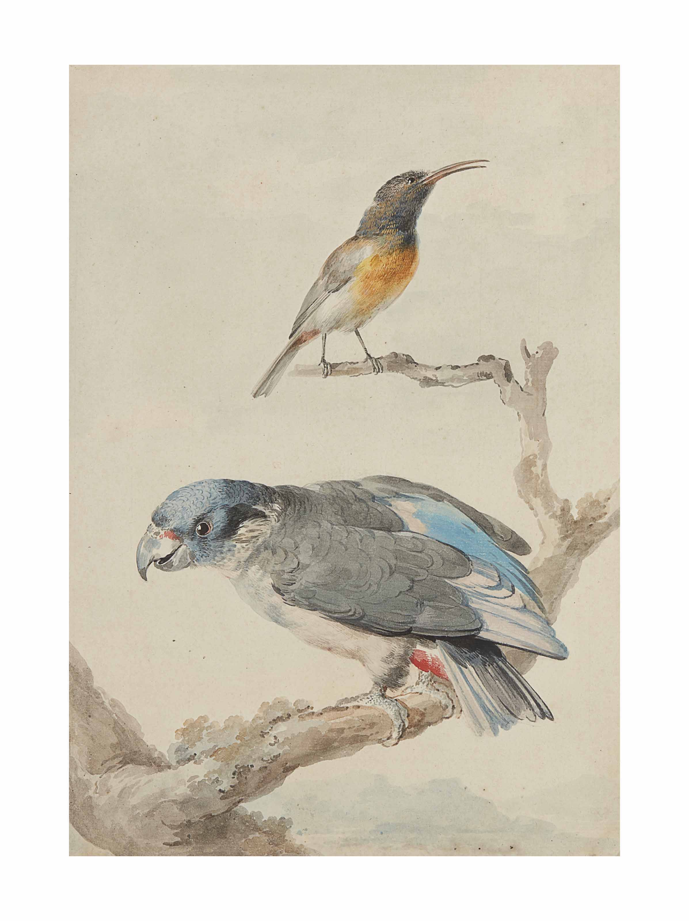An sunbird (?) and a Dusky parrot (Pionus fuscus) on a branch
