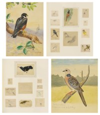Collected field studies of birds, including crows, orioles, tailor birds, hoopoe, tree sparrow, greenfinches, including many Ceylonese subjects