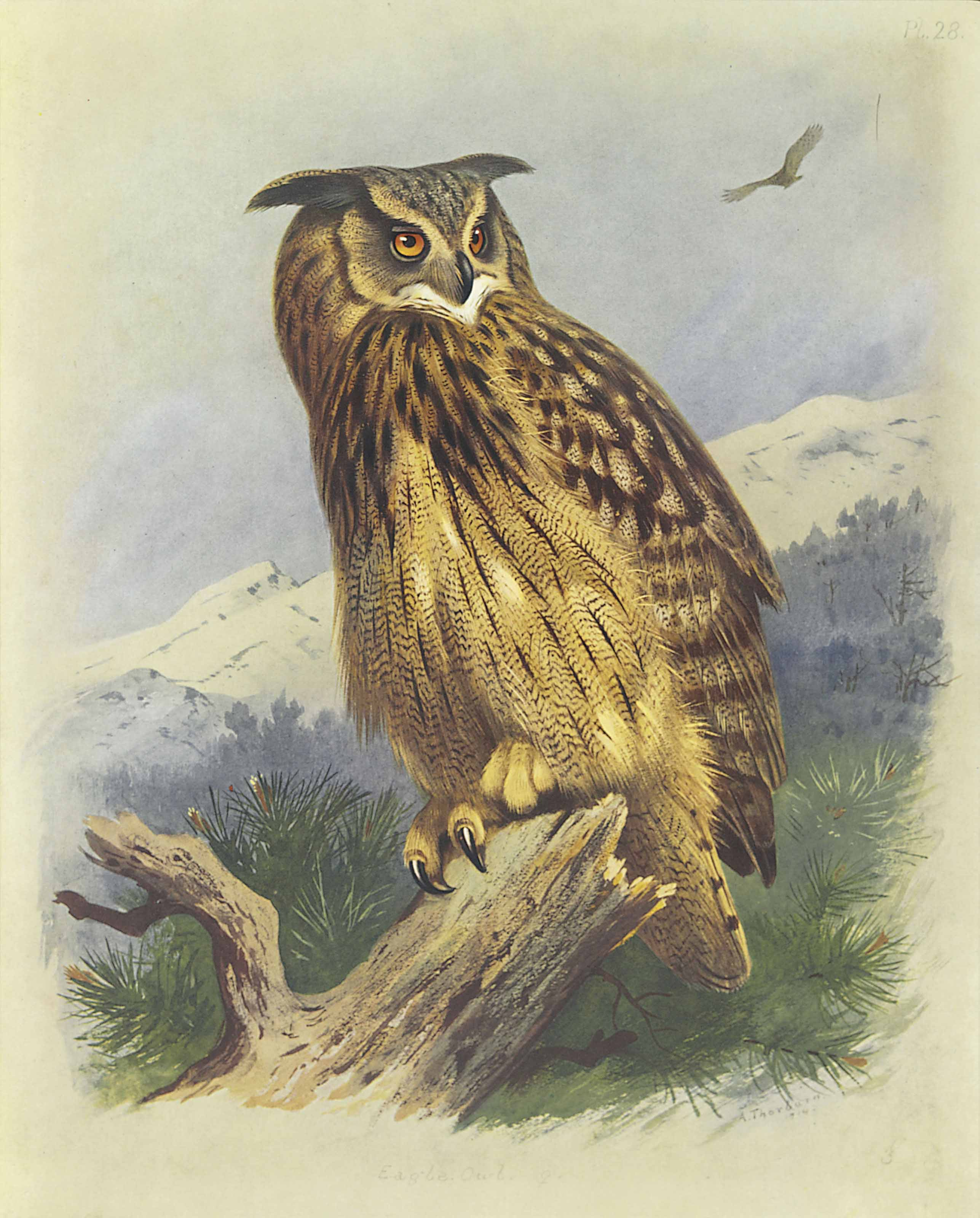 High Quality British Made Perching Owl Weathervane. 44
