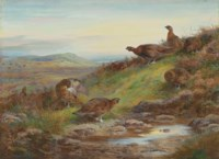 A covey of red grouse by a spring